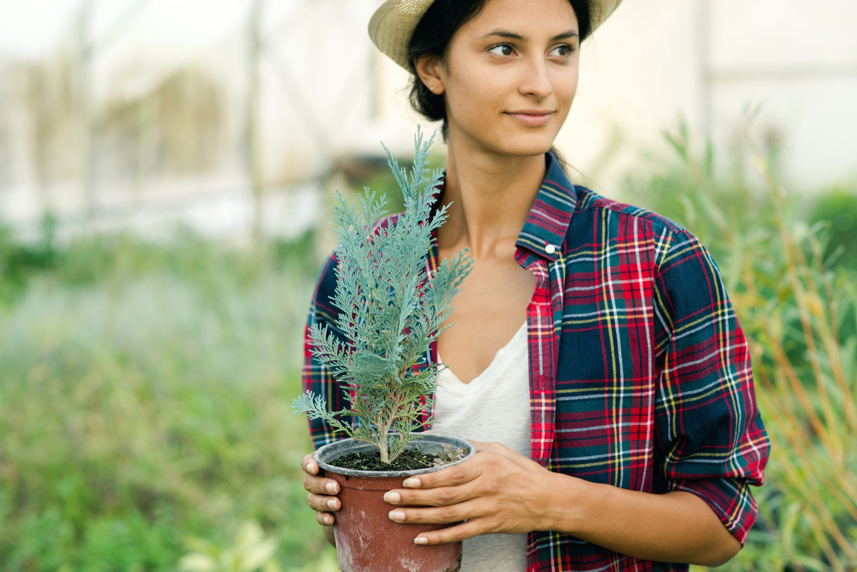 Fall Plants 101: Everything You Need to Know About the Autumnal Planting Season