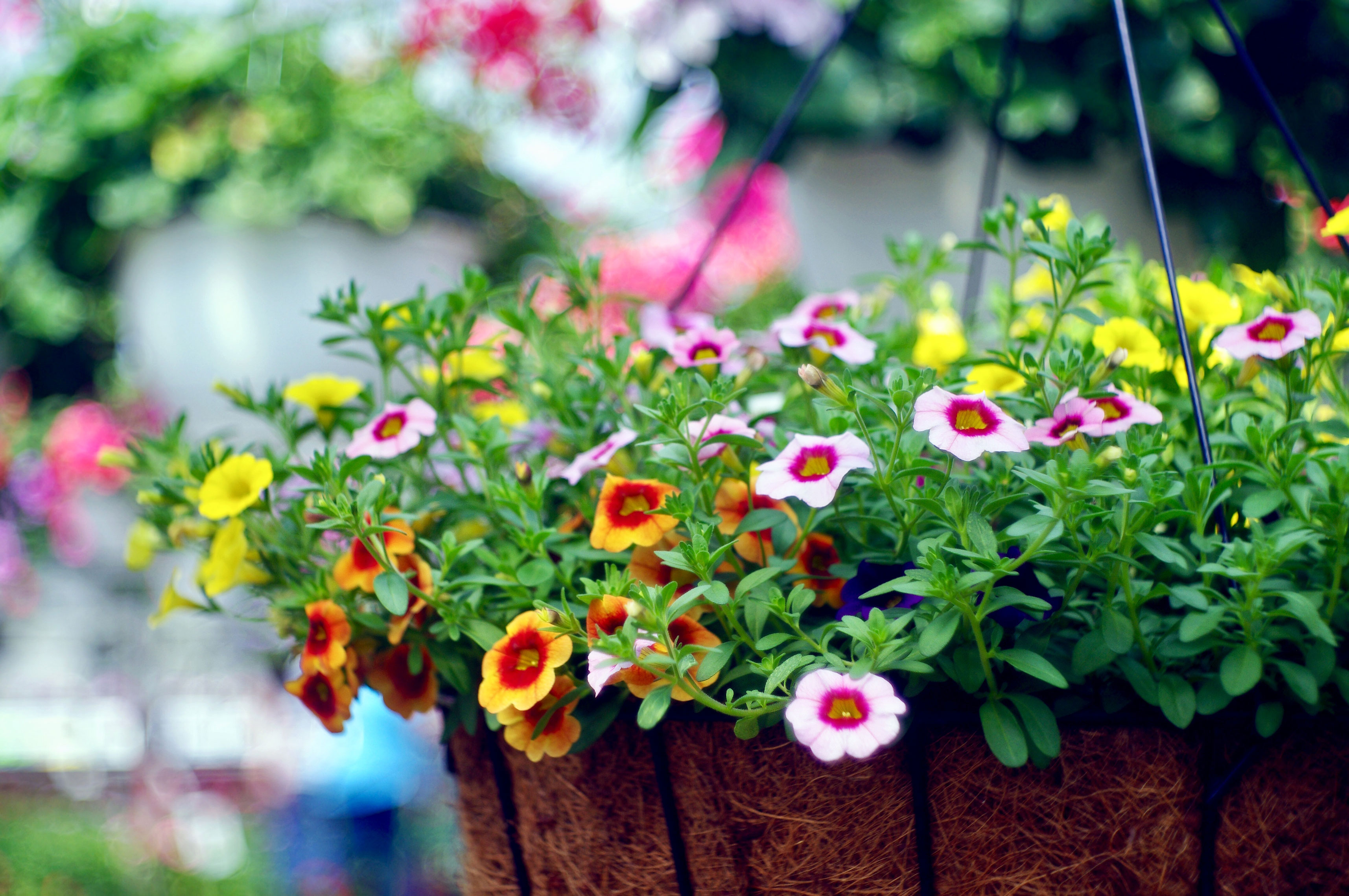 Five Ways Easy Ways to Add Flowers to Your Front Porch