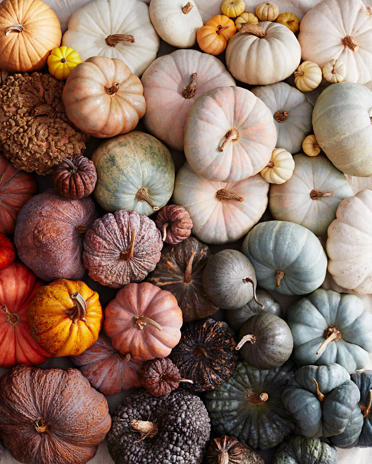 A Guide to All the Different Types of Pumpkins