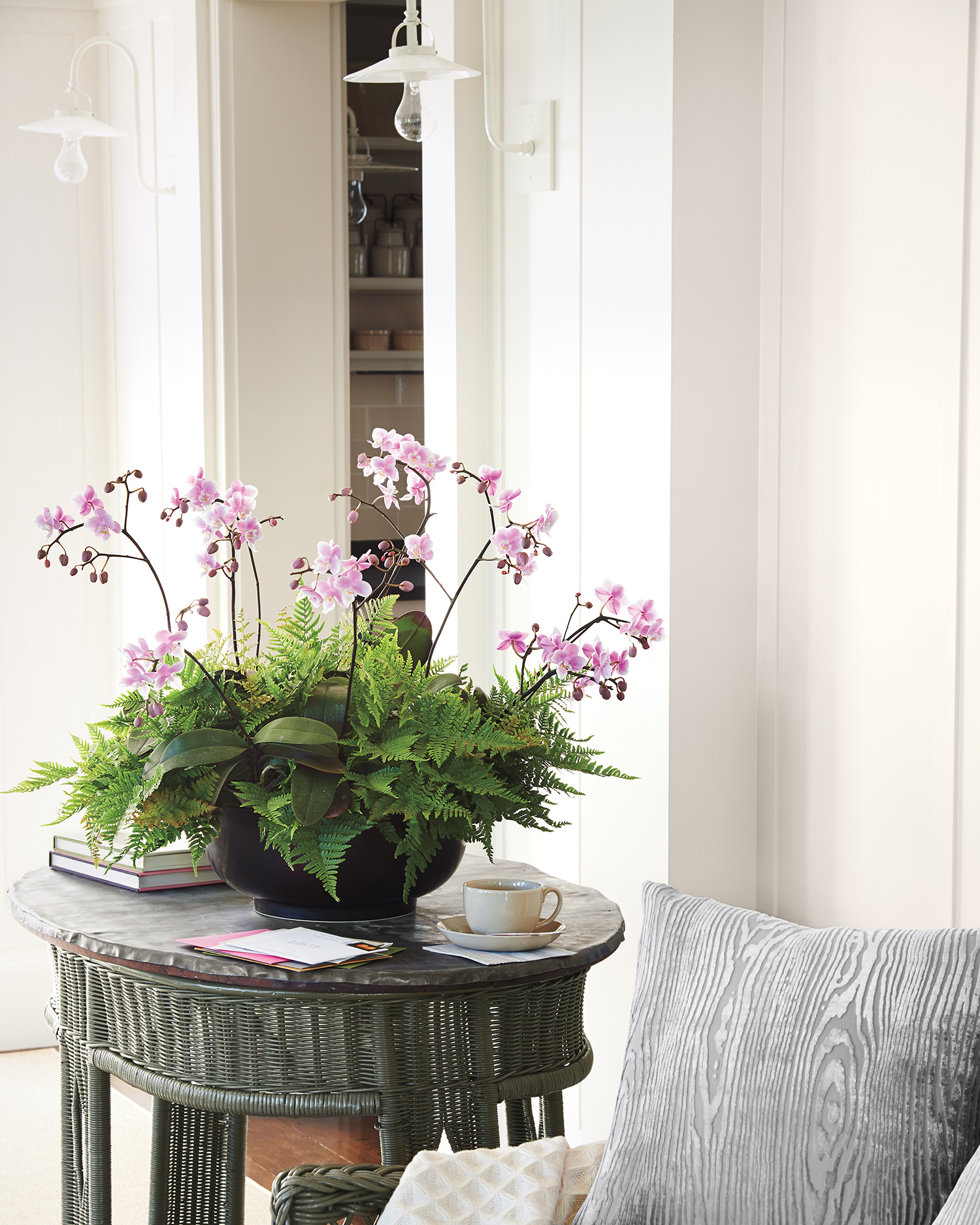 How to Keep Your Orchid Alive