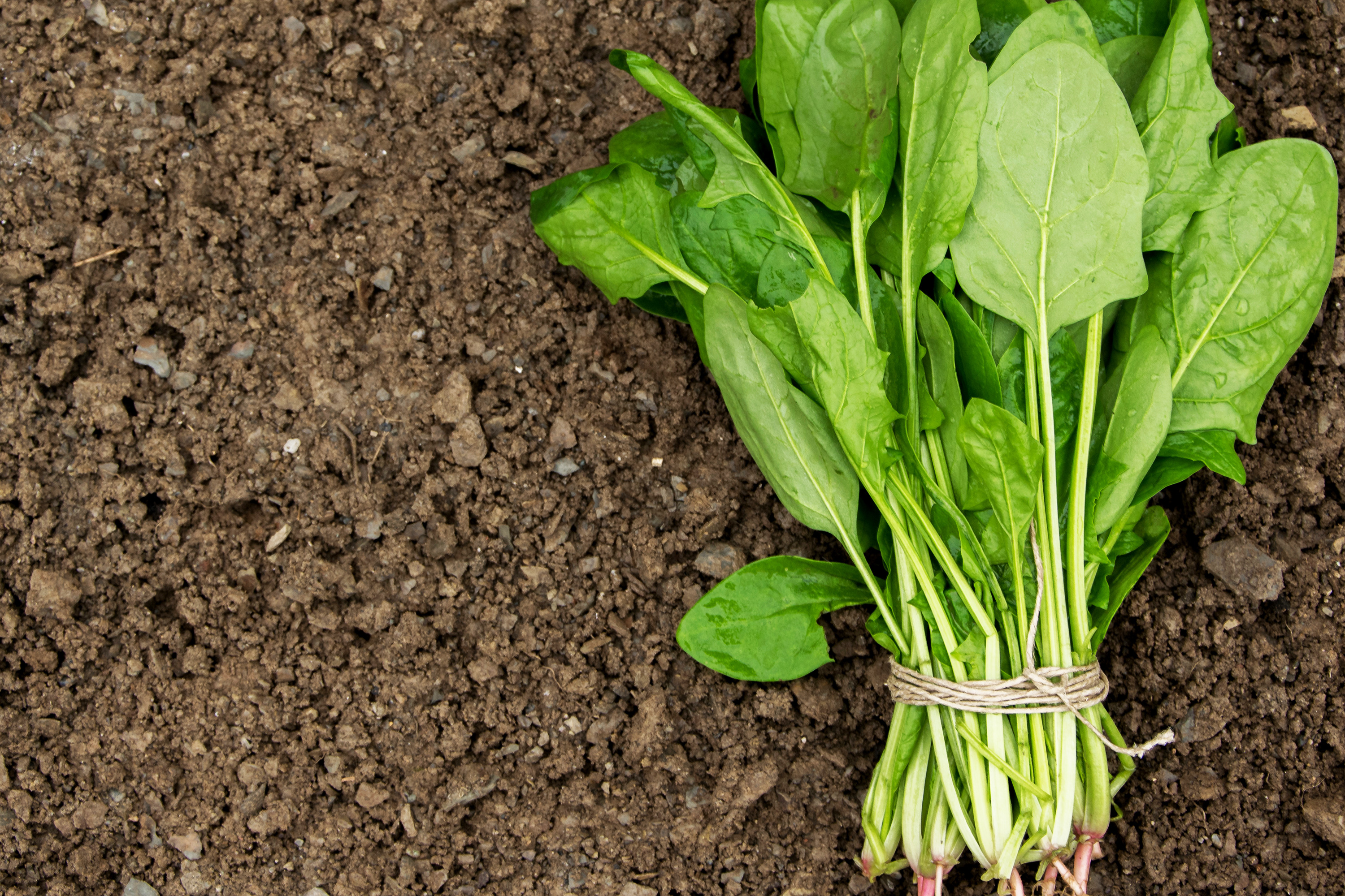 Dole Recalls Baby Spinach Amid Salmonella Outbreak in These 10 States