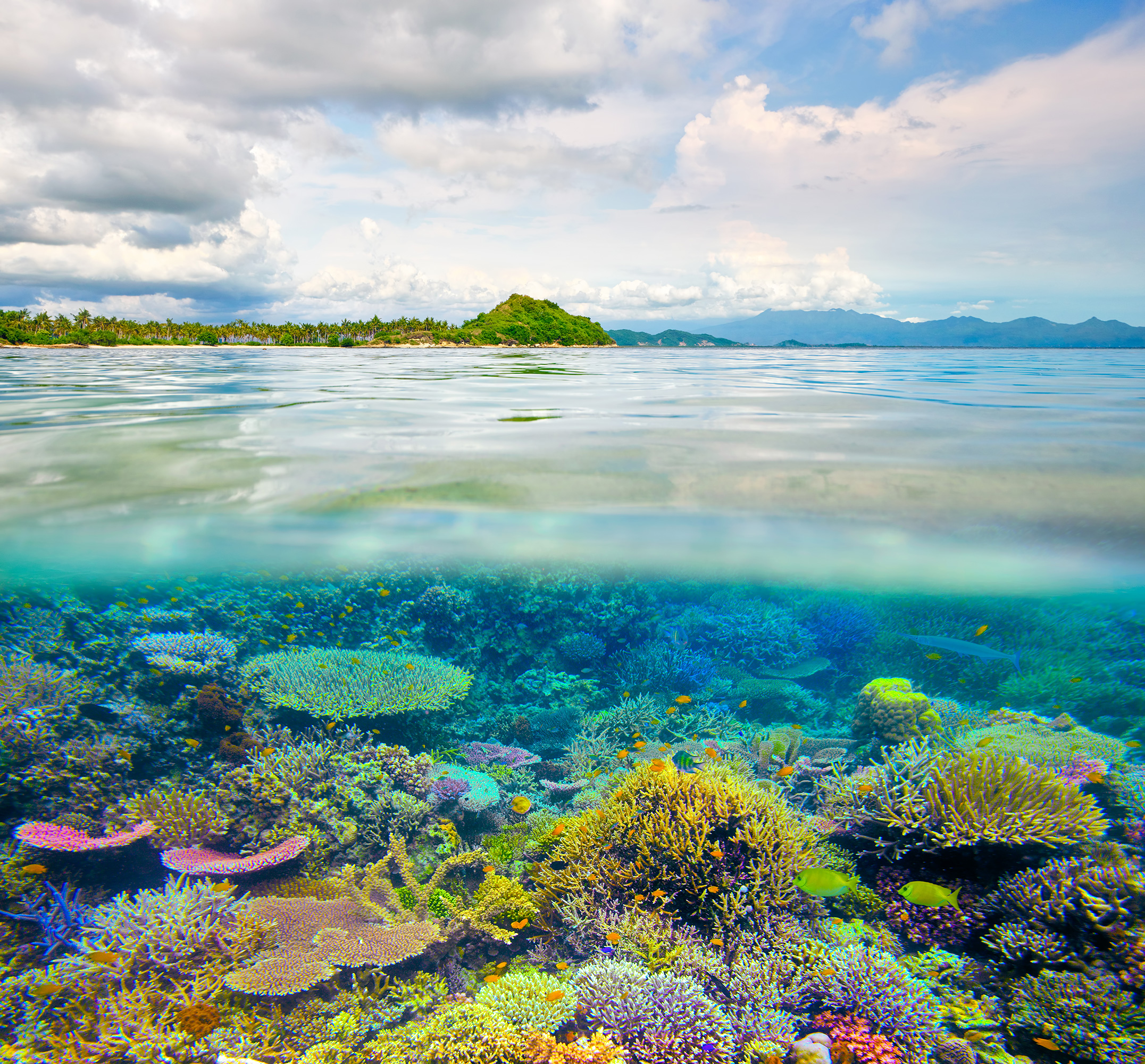 Scientists Have Discovered Pockets of Coral Reefs Surviving in Warmer Waters