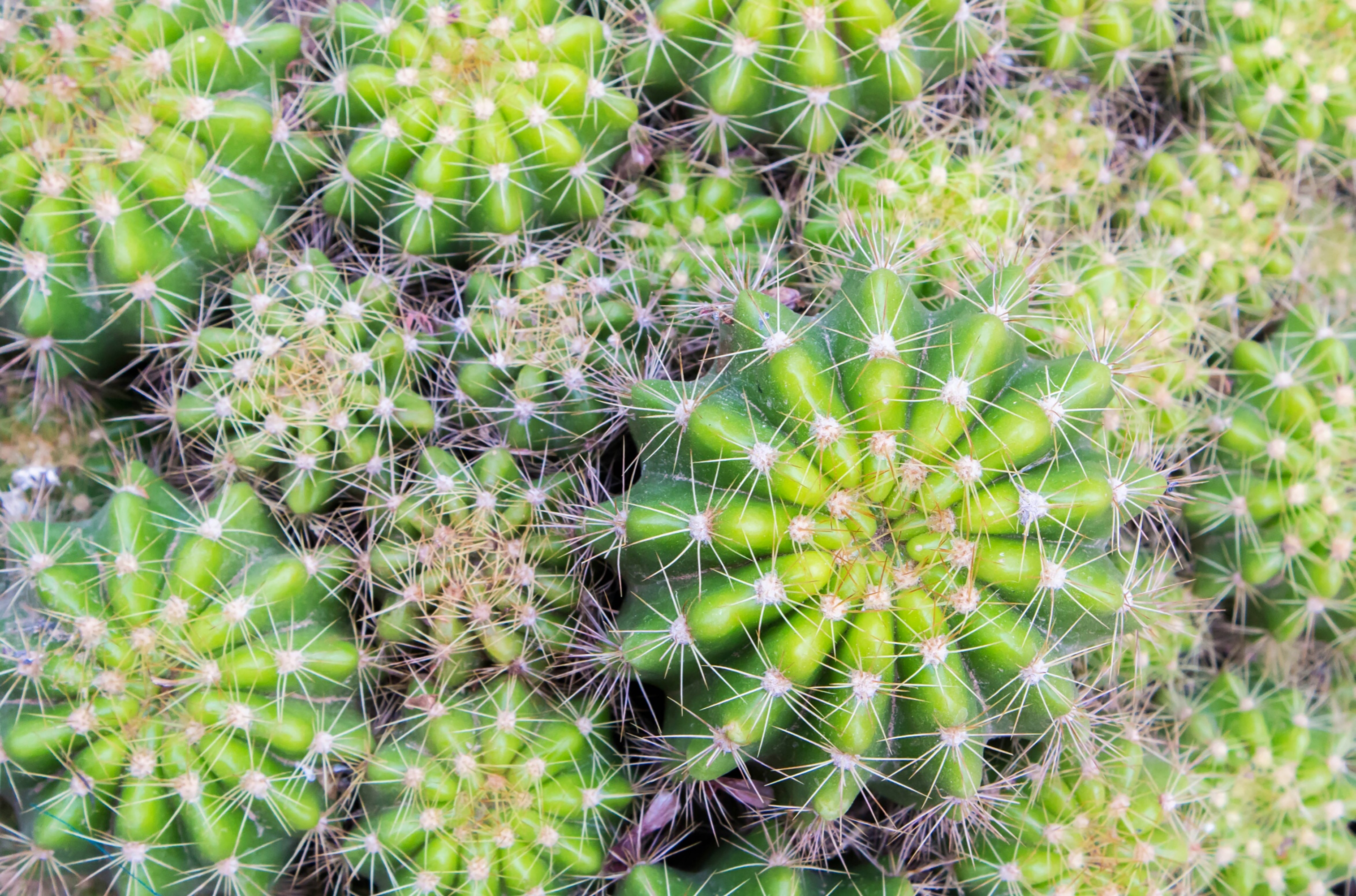 Love Succulents? Take in a Sea of Cacti at the Nation's Largest Cactus Convention