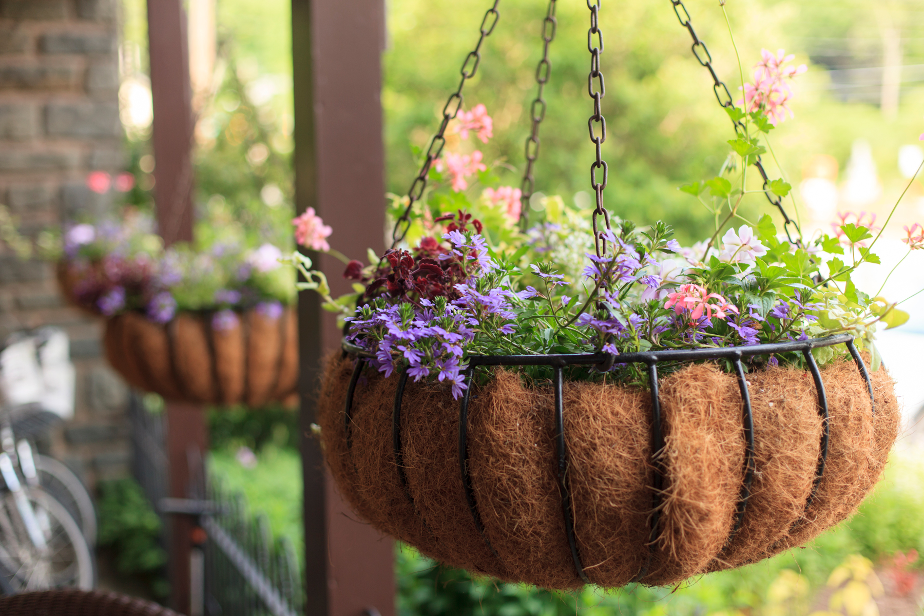 How to Choose the Right Plants for Your Hanging Baskets