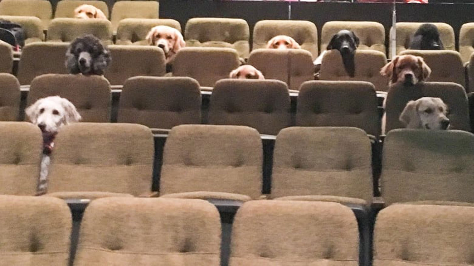 People Can't Stop Looking at This Photo of Service Dogs Sitting Through a Performance of Billy Elliot