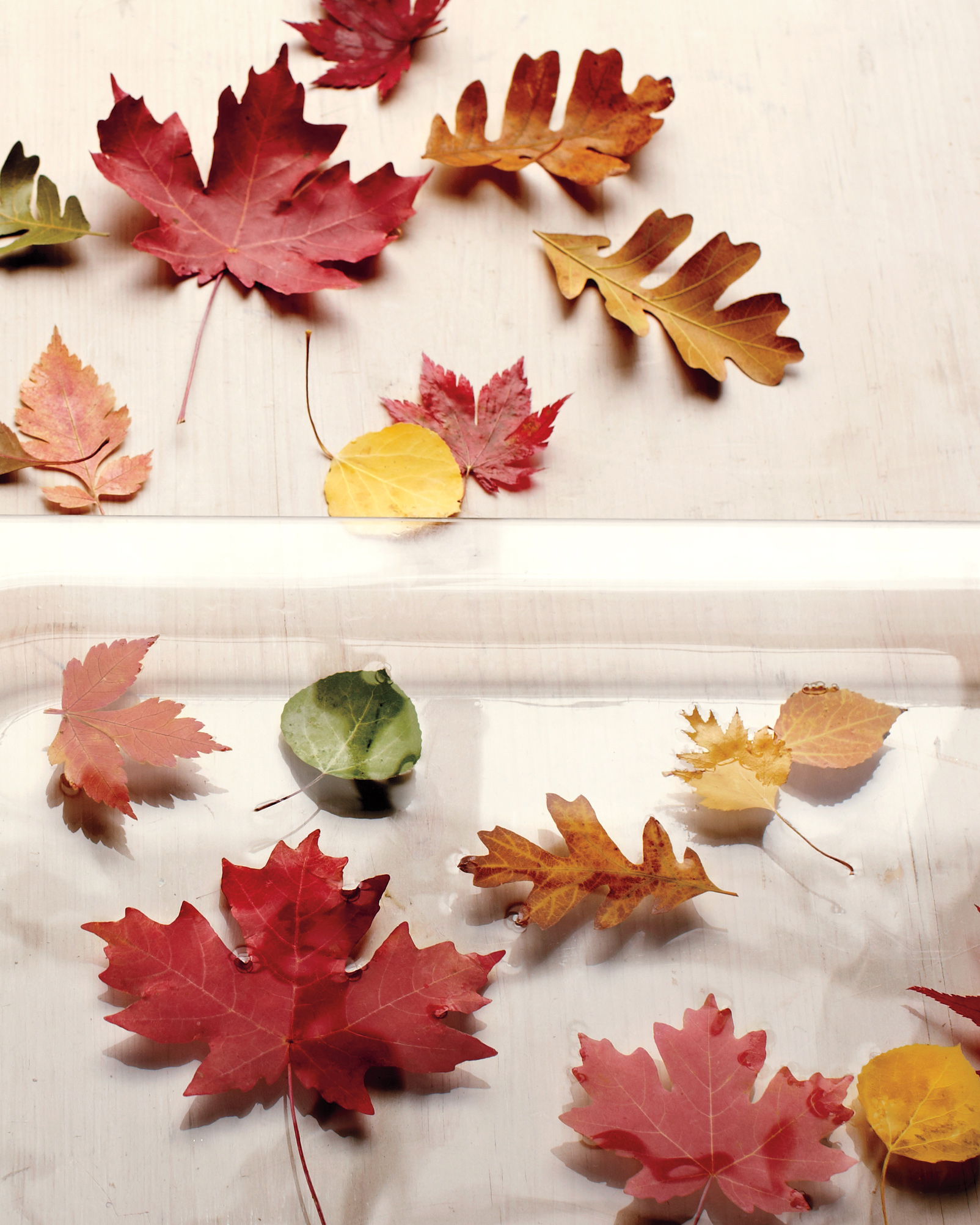 12 Leaf Crafts That Celebrate All the Colors of Fall