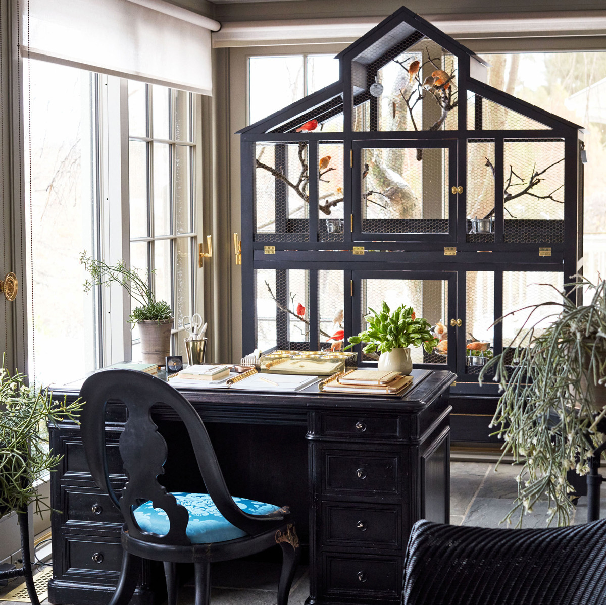 black canary cage in office