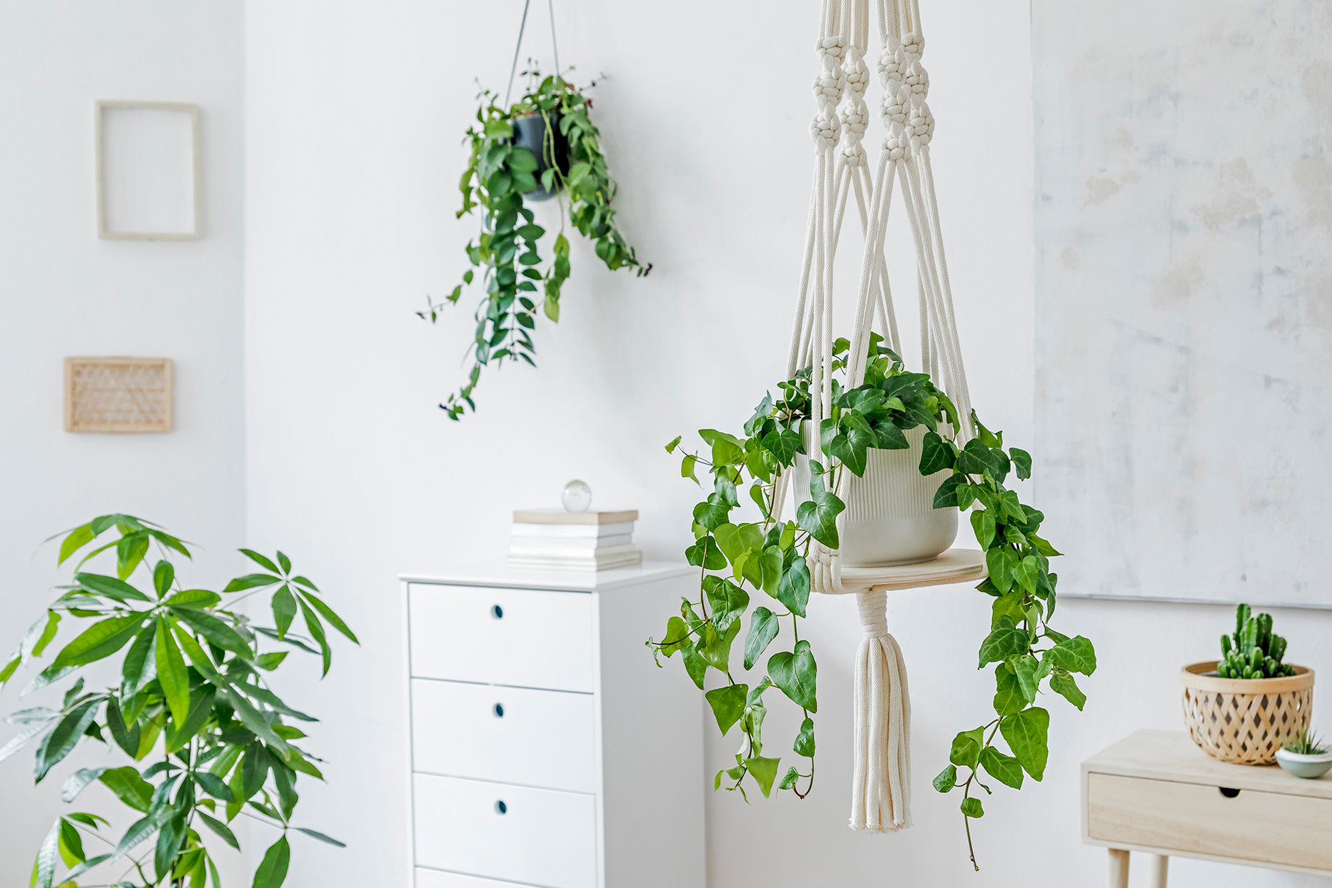 hanging baskets in white room