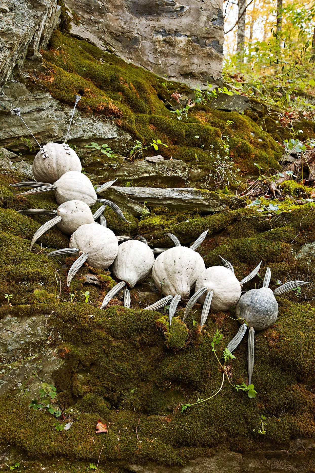 white pumpkins sculpted to be a millipede