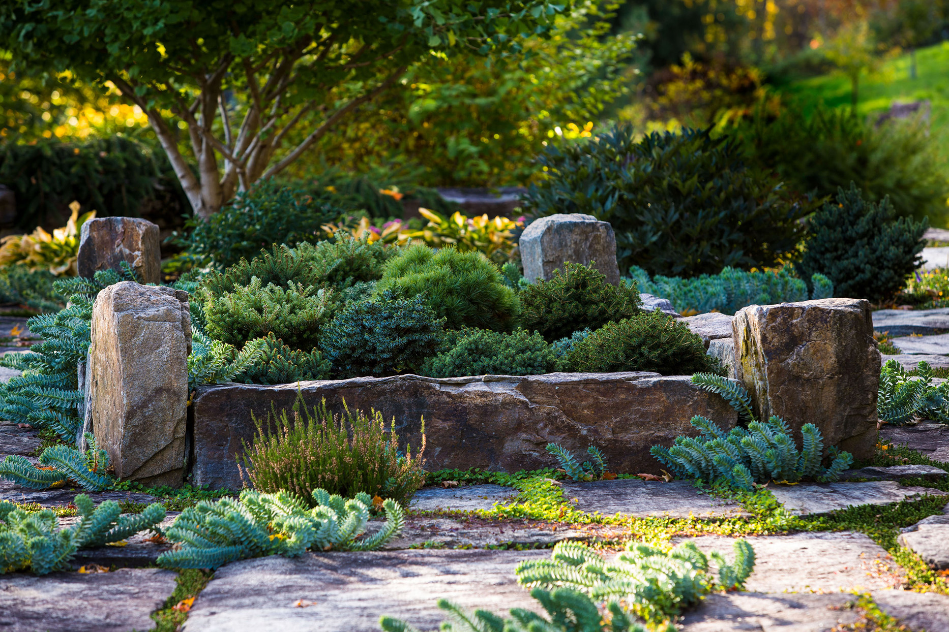 planting bed with stones and lush greenery