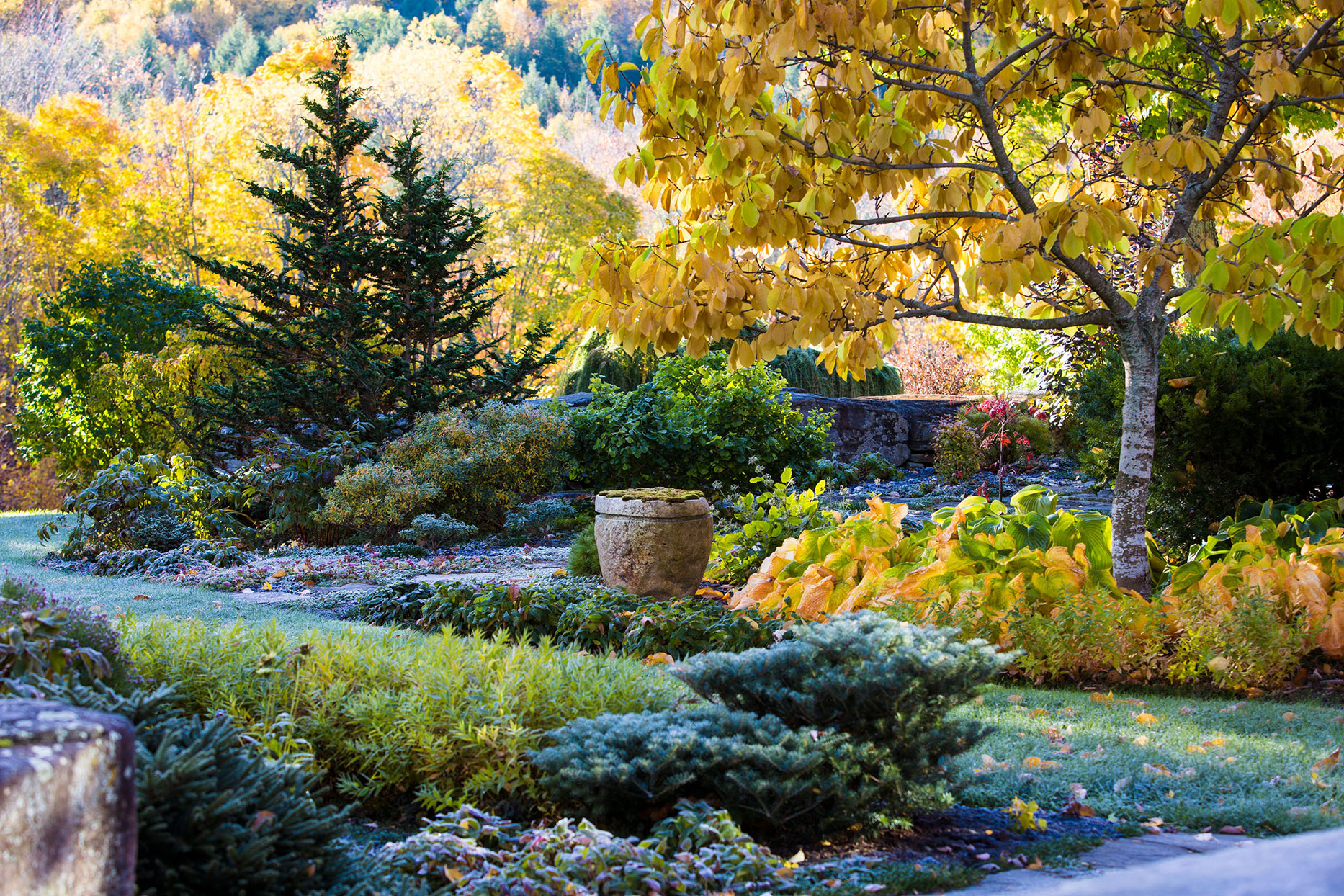 variety of lush perennials growing in garden during fall