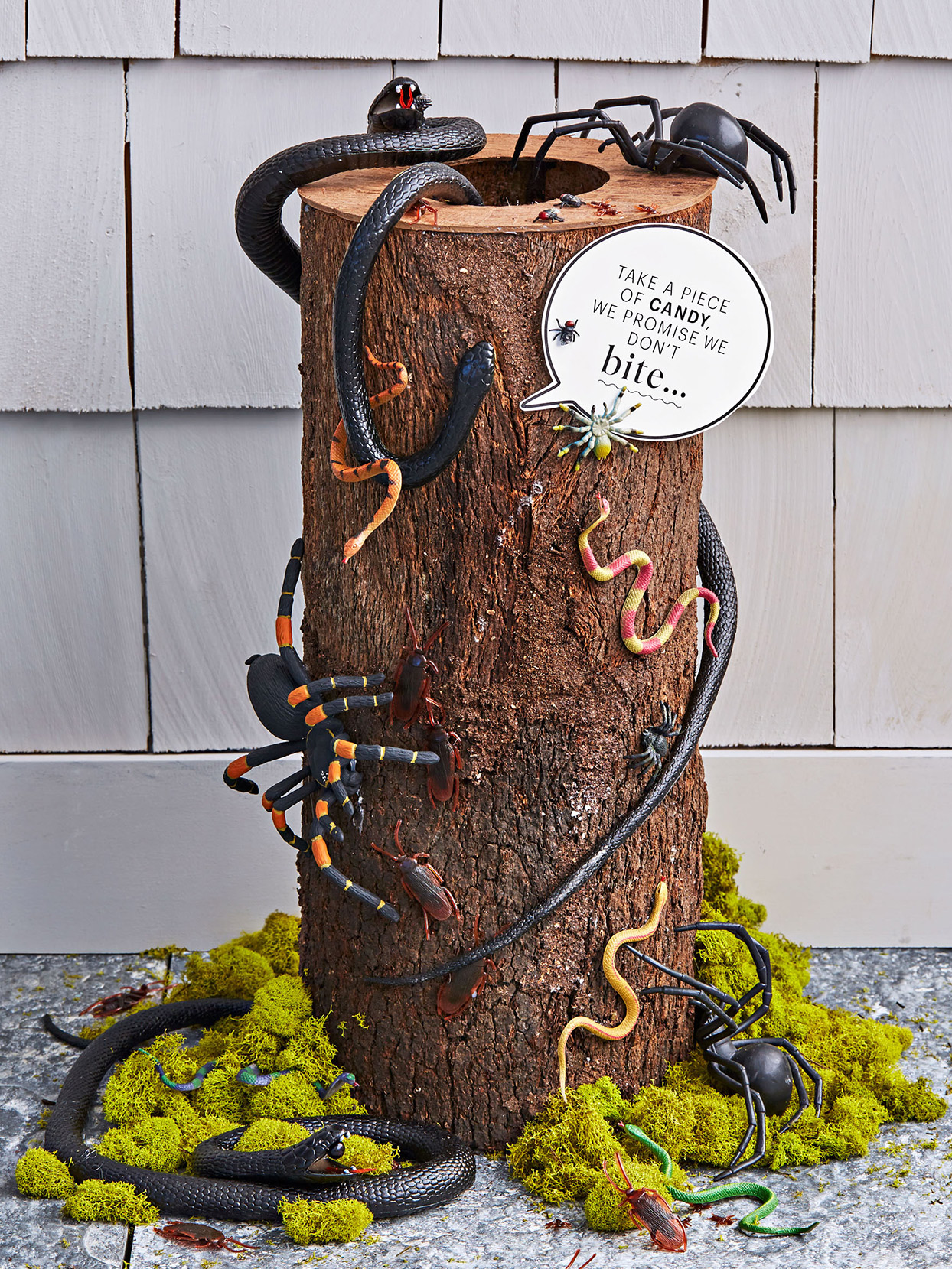 halloween treat log with fake bugs and snakes