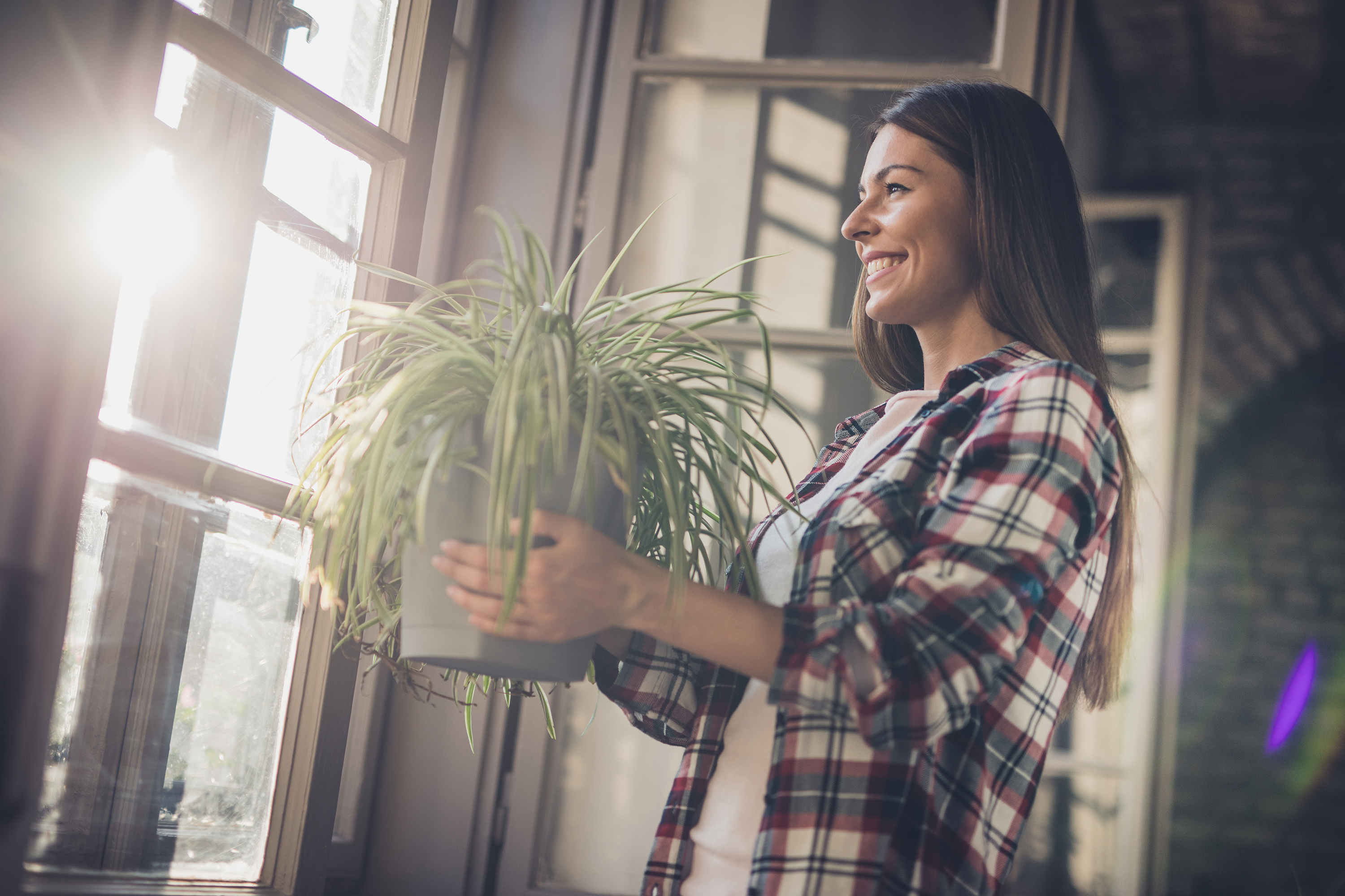 Woman Holding a Houseplant at Home