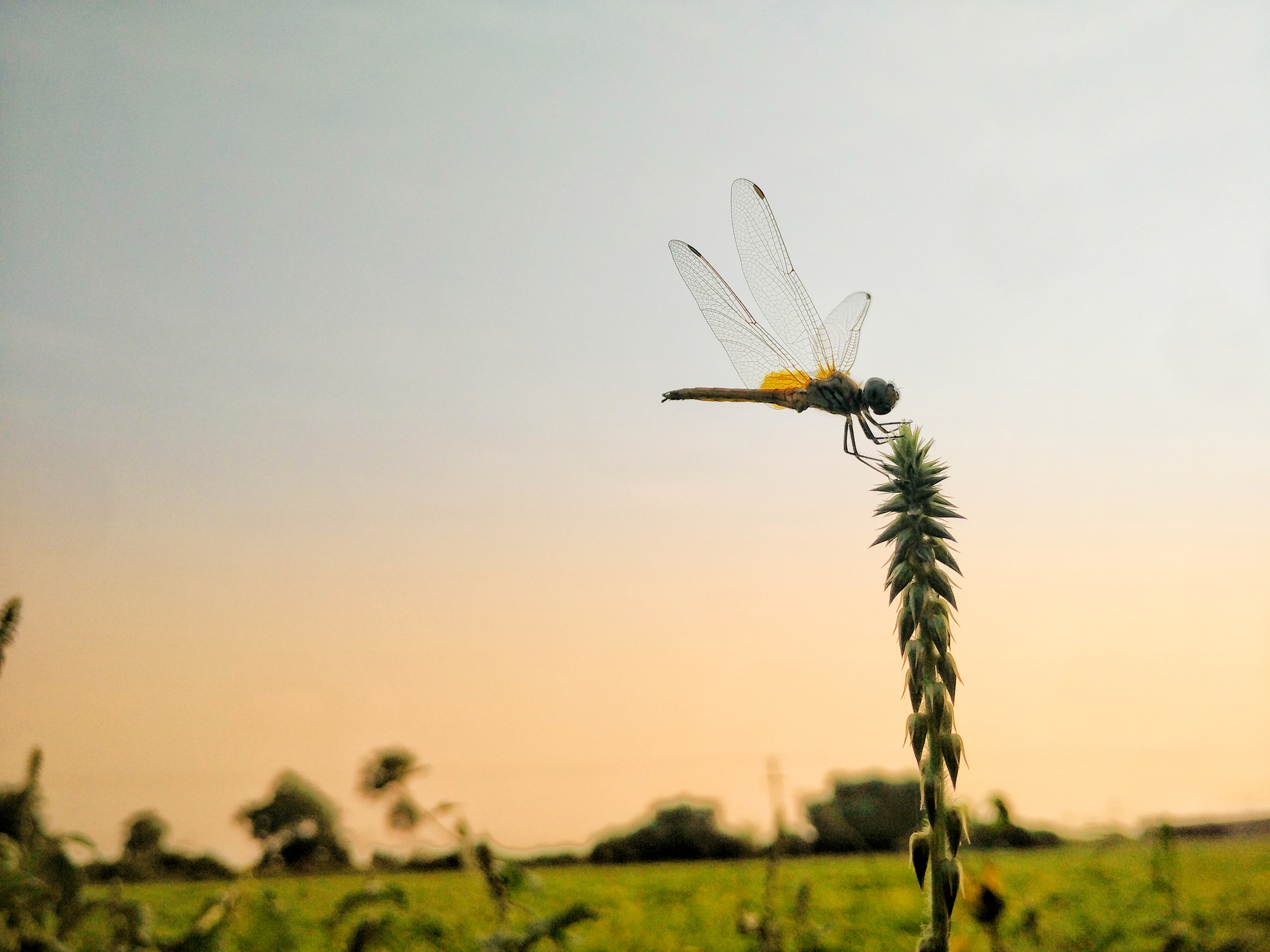 Meteorologists Stumble Upon Massive Swarms of Dragonflies Heading South for the Winter