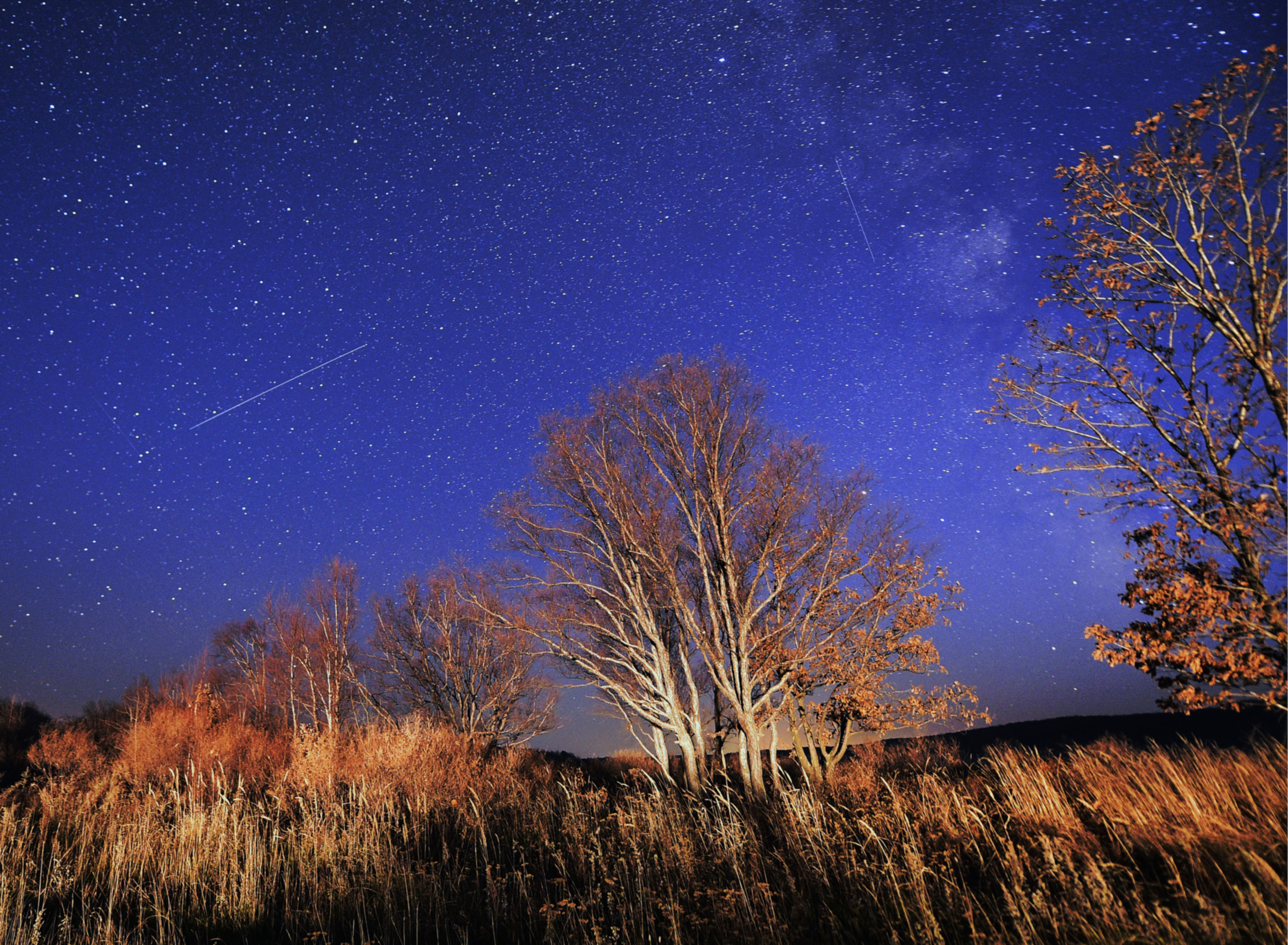 Our Sky Will Be Full of Shooting Stars This Week Thanks to Halley's Comet