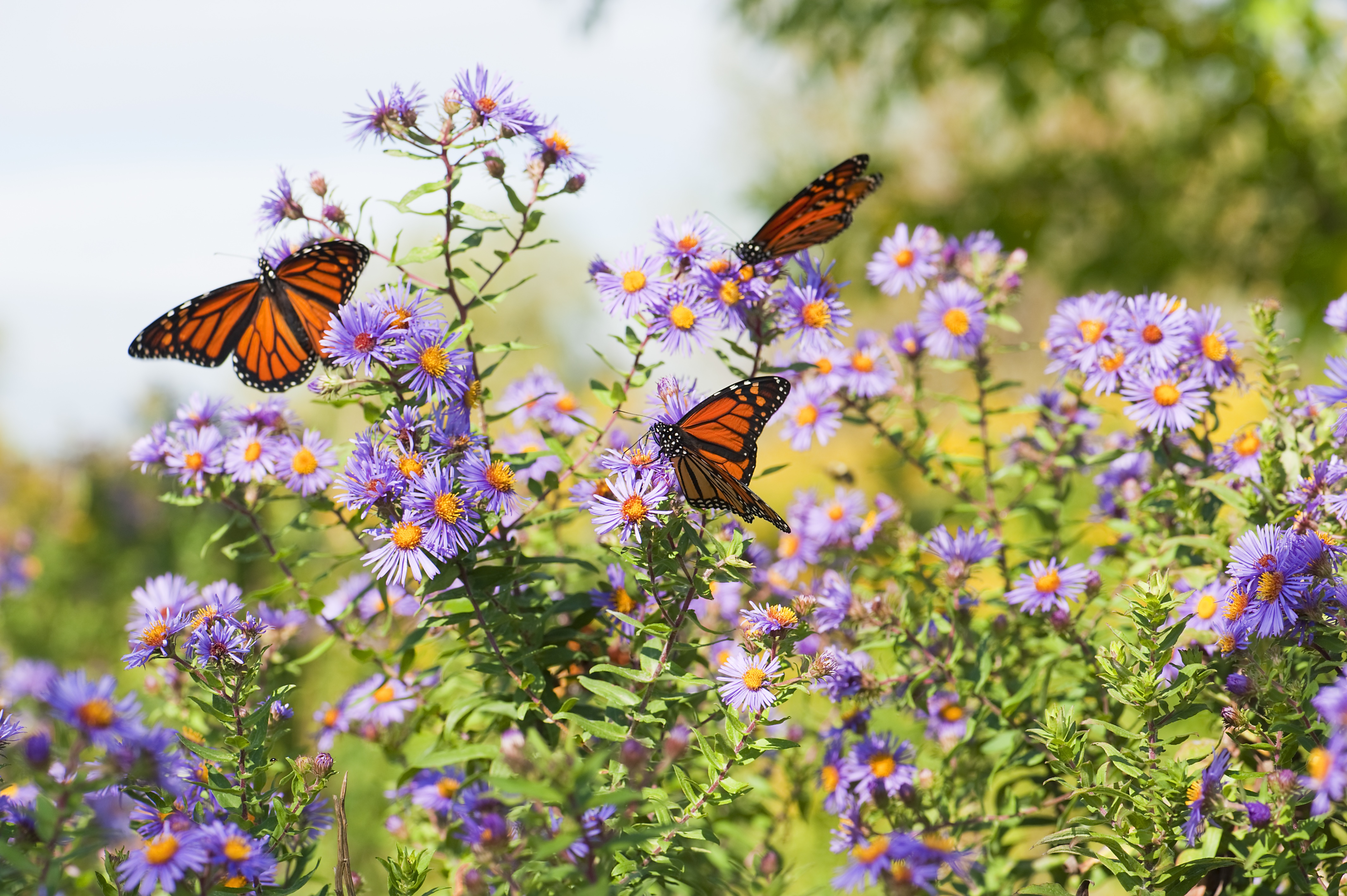 There's an Extra-Large Migration of Monarch Butterflies Fluttering Through Texas