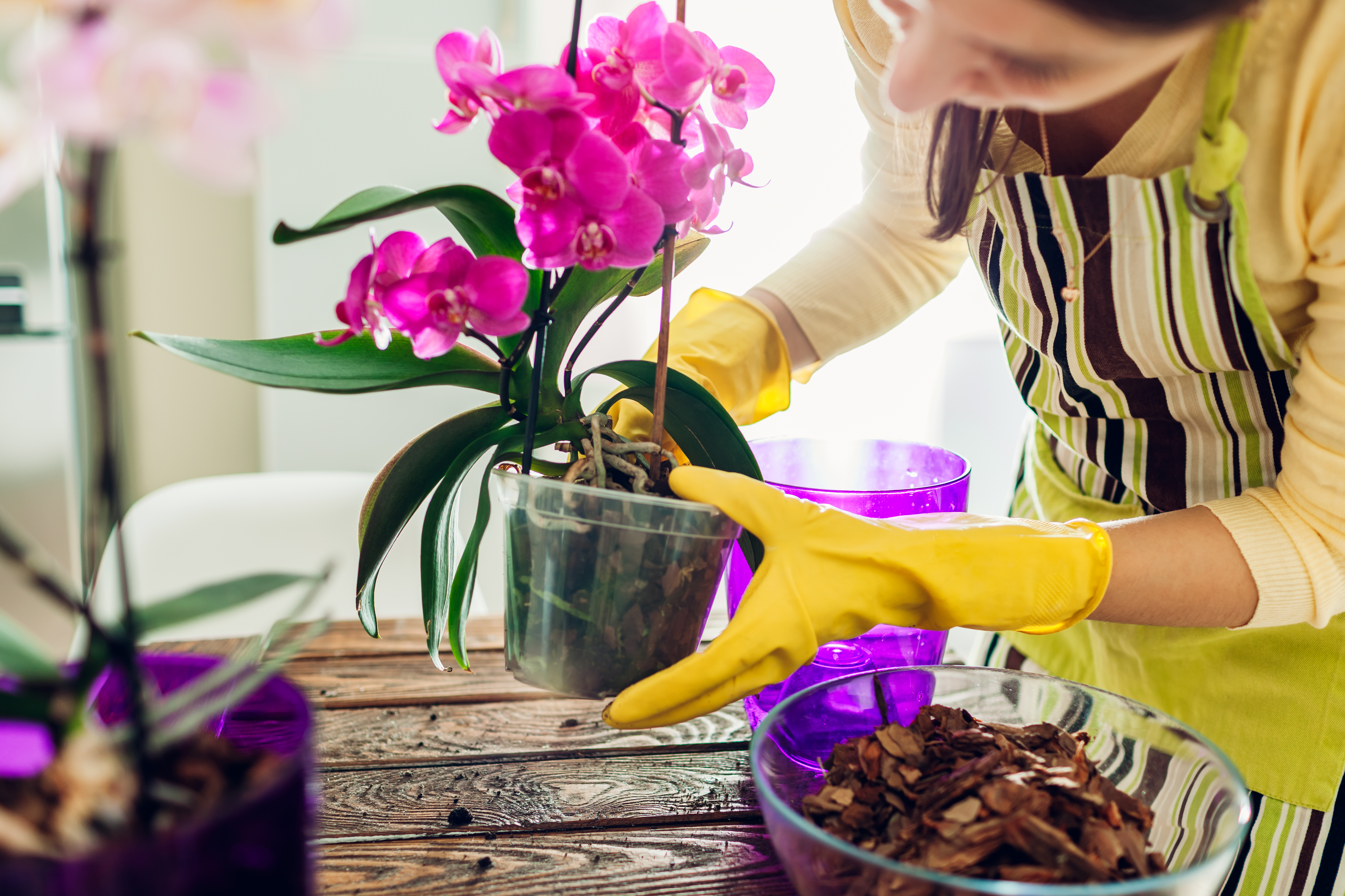 How to Choose the Right Pot for Your Orchid