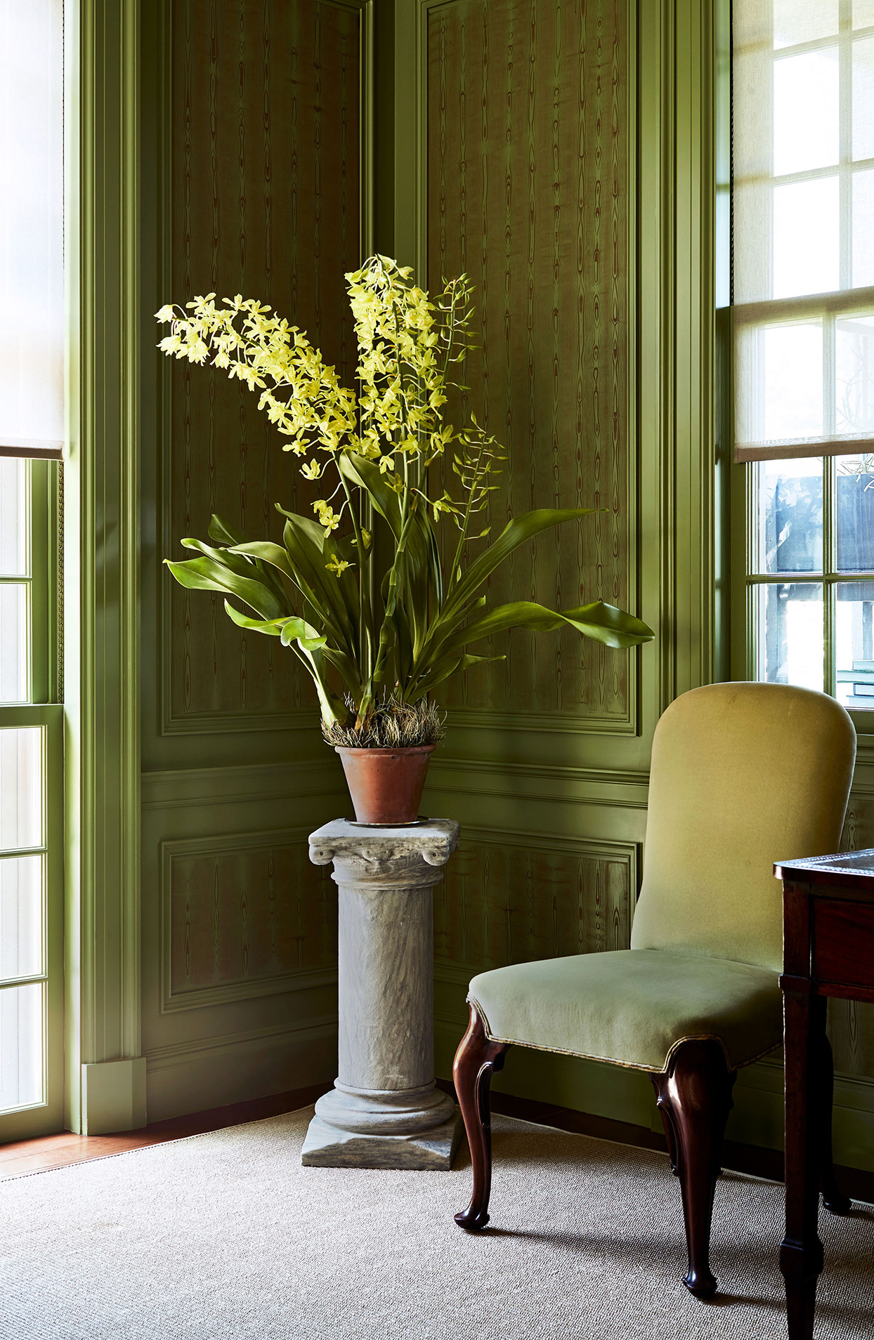 Nine of Martha Stewart's Unique, Beautiful Houseplants—Plus, a Look at How She Displays Each