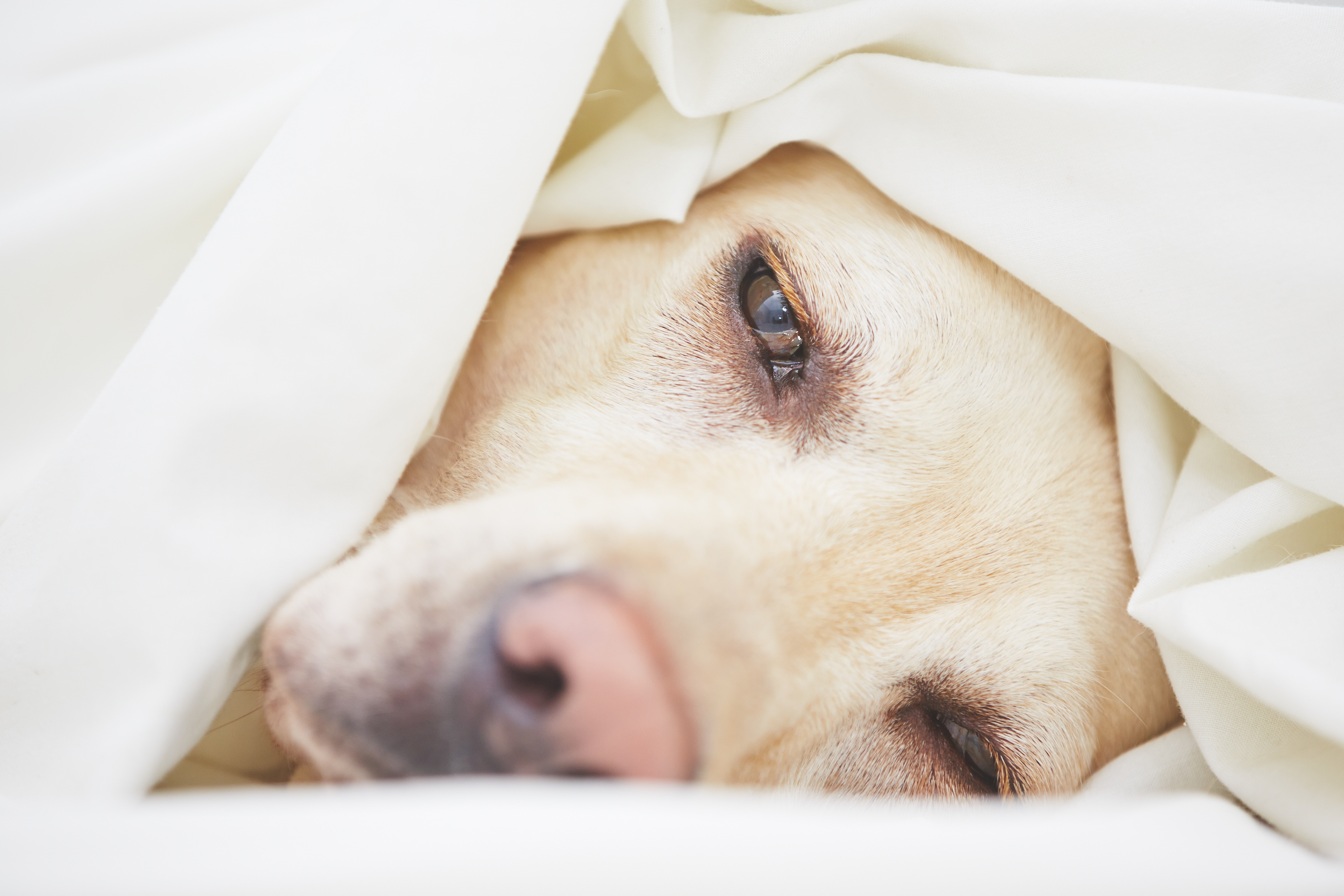 Everything You Need to Know About Canine Flu