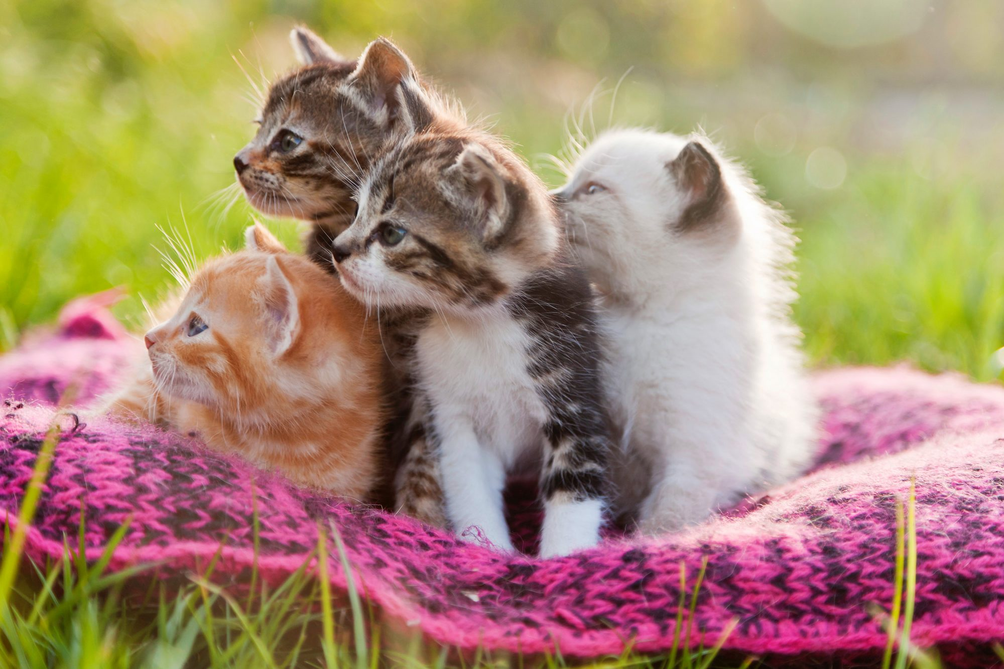 The Most Popular Cat Breeds In The United States Martha Stewart