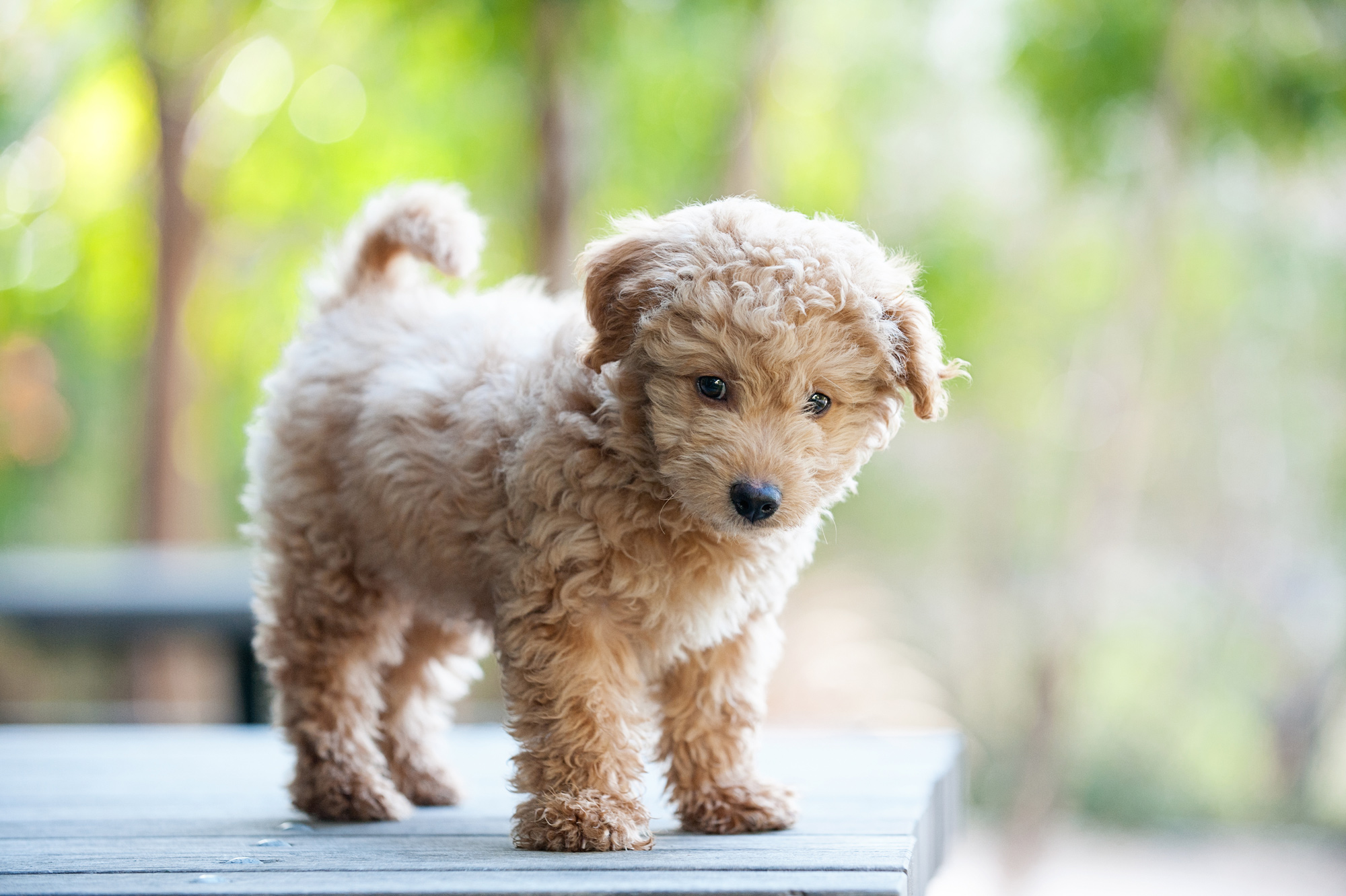 Dog Breeds That Look Like Puppies At Any Age Martha Stewart