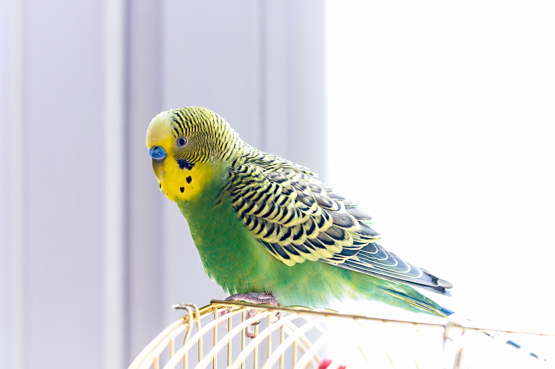 How To Choose The Right Pet Bird For You Martha Stewart