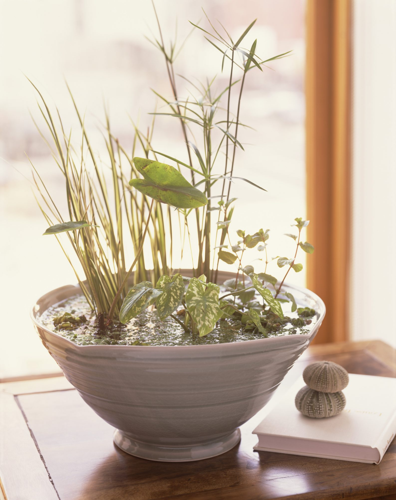How to Create a Container Water Gardens   Martha Stewart