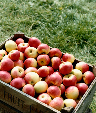 8 Health Benefits of Apples