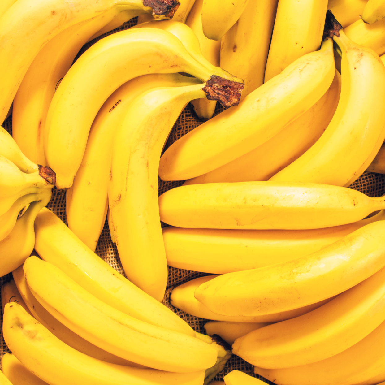 Banana-Killing Fungus Could Make the Fruit Go Extinct