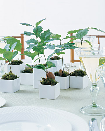 Eco-Friendly Favors & Gifts