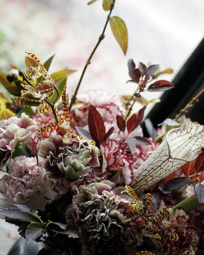 underrated-flowers-carnations-saipua-1115.jpg