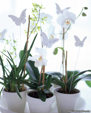 White Favors: Potted Orchids
