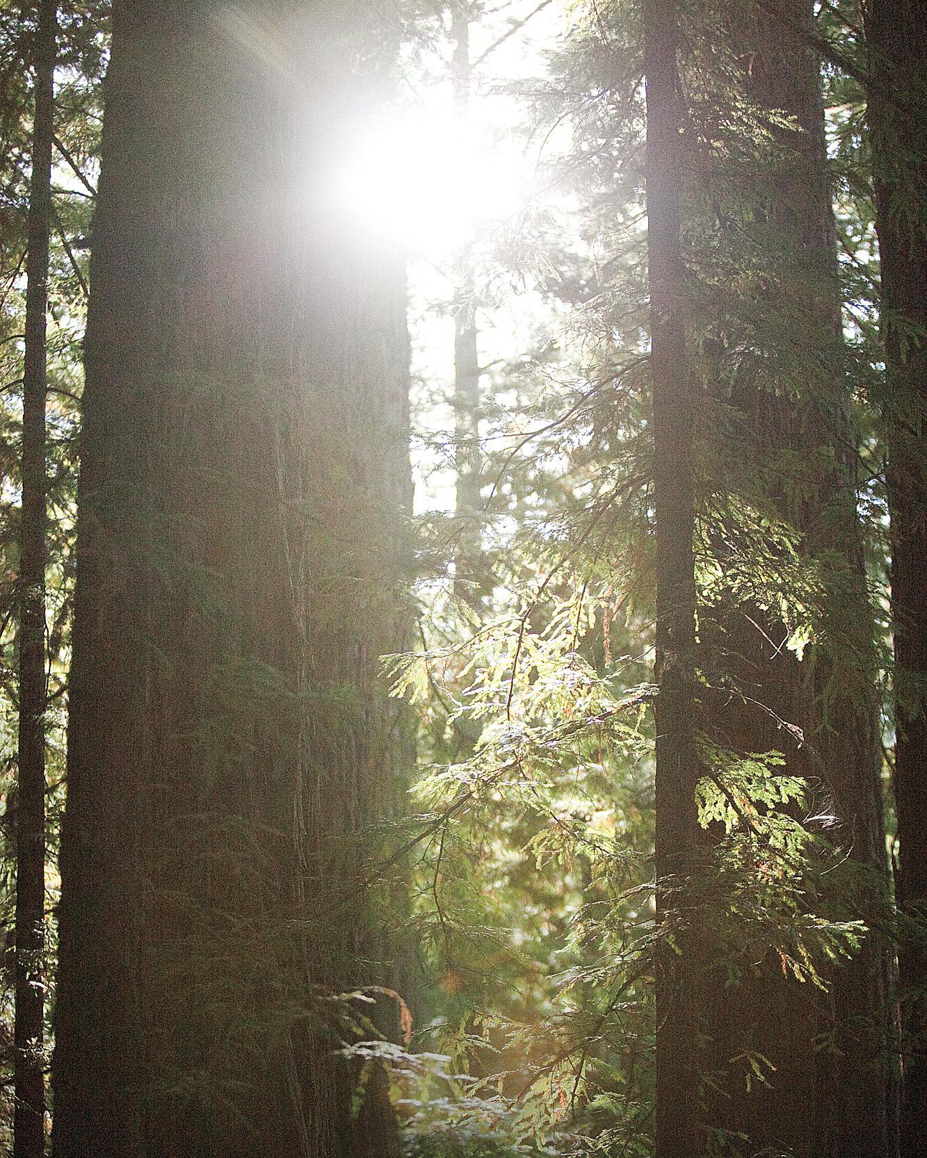 rw-laura-justin-red-woods-ms107644.jpg