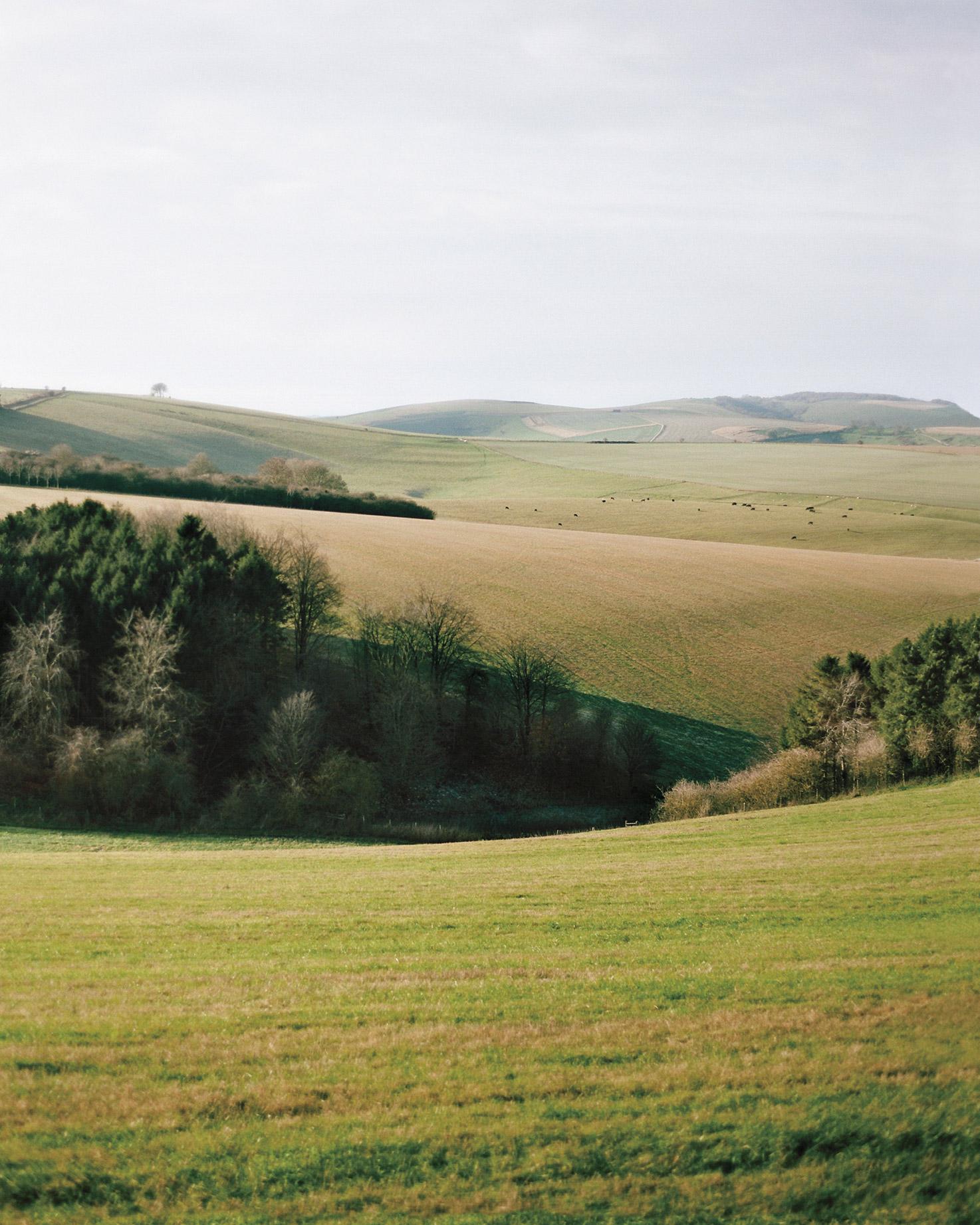 rw-heather-neal-scenic-hills-ms107641.jpg
