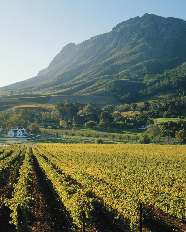 south-africa-winelands-mwds108344.jpg