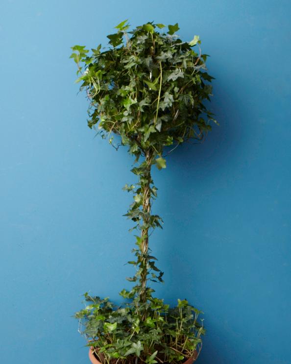 registry-topiary-001-wd108979.jpg