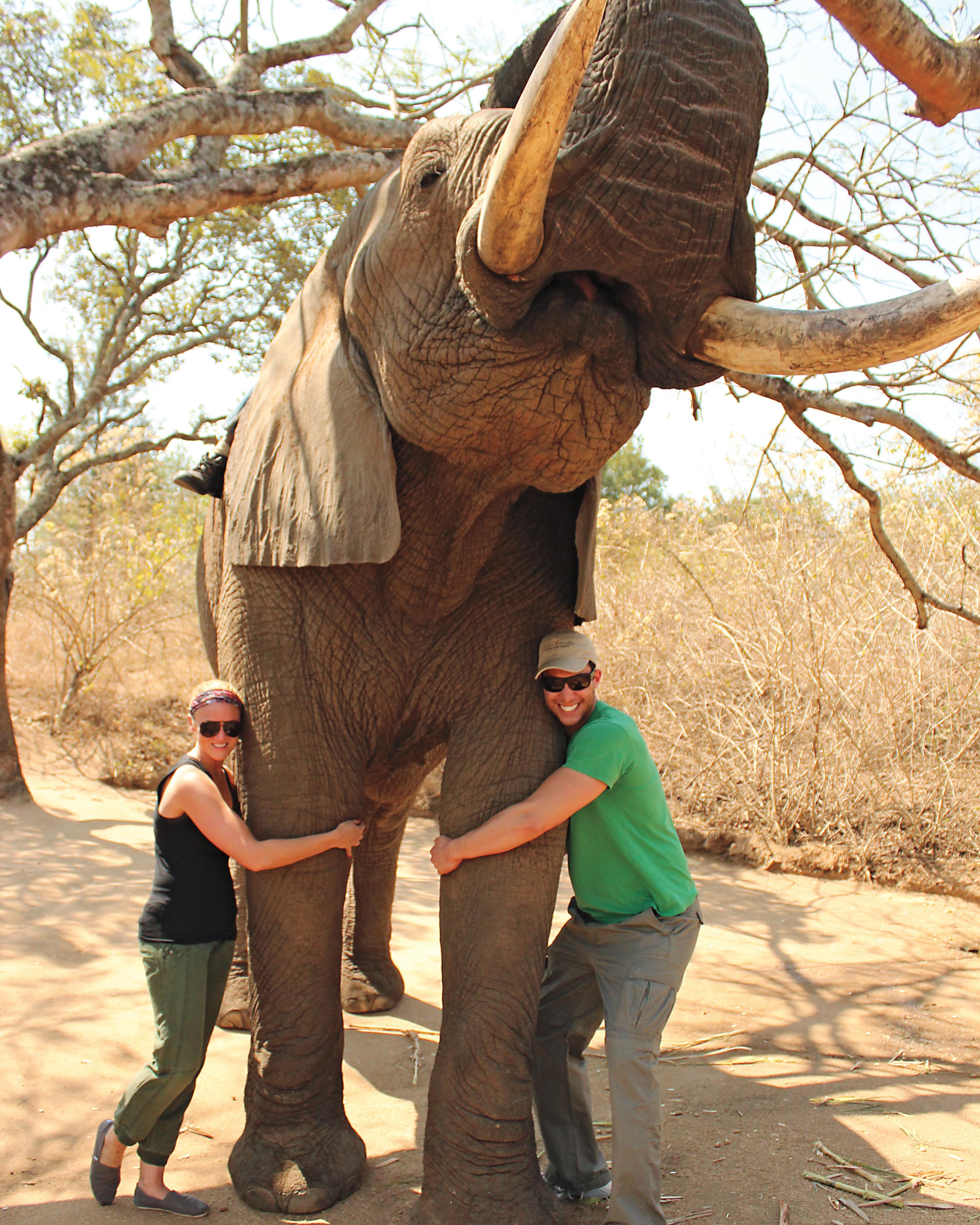 elephant-mws109850.jpg