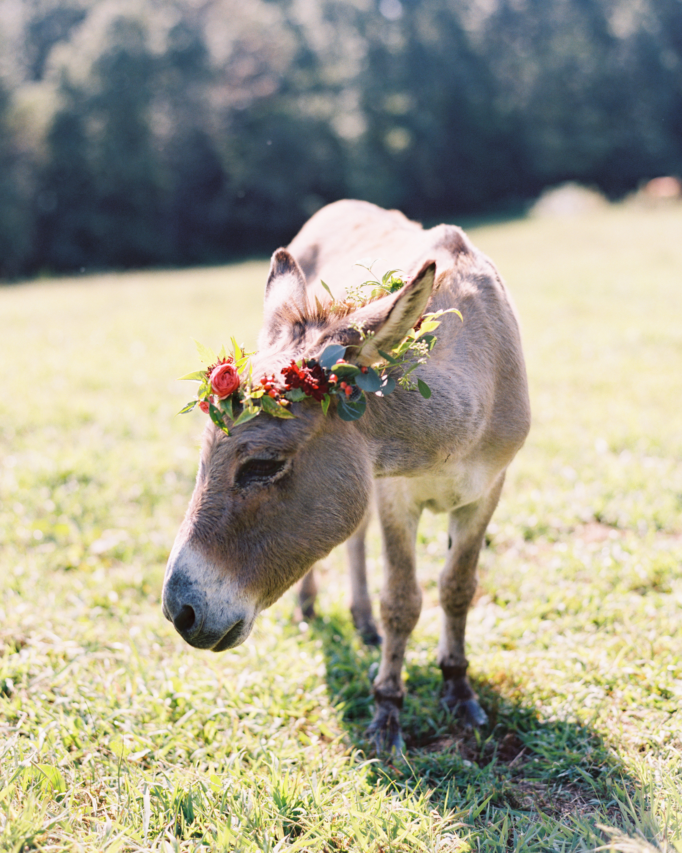The Well-Dressed Donkey Diva
