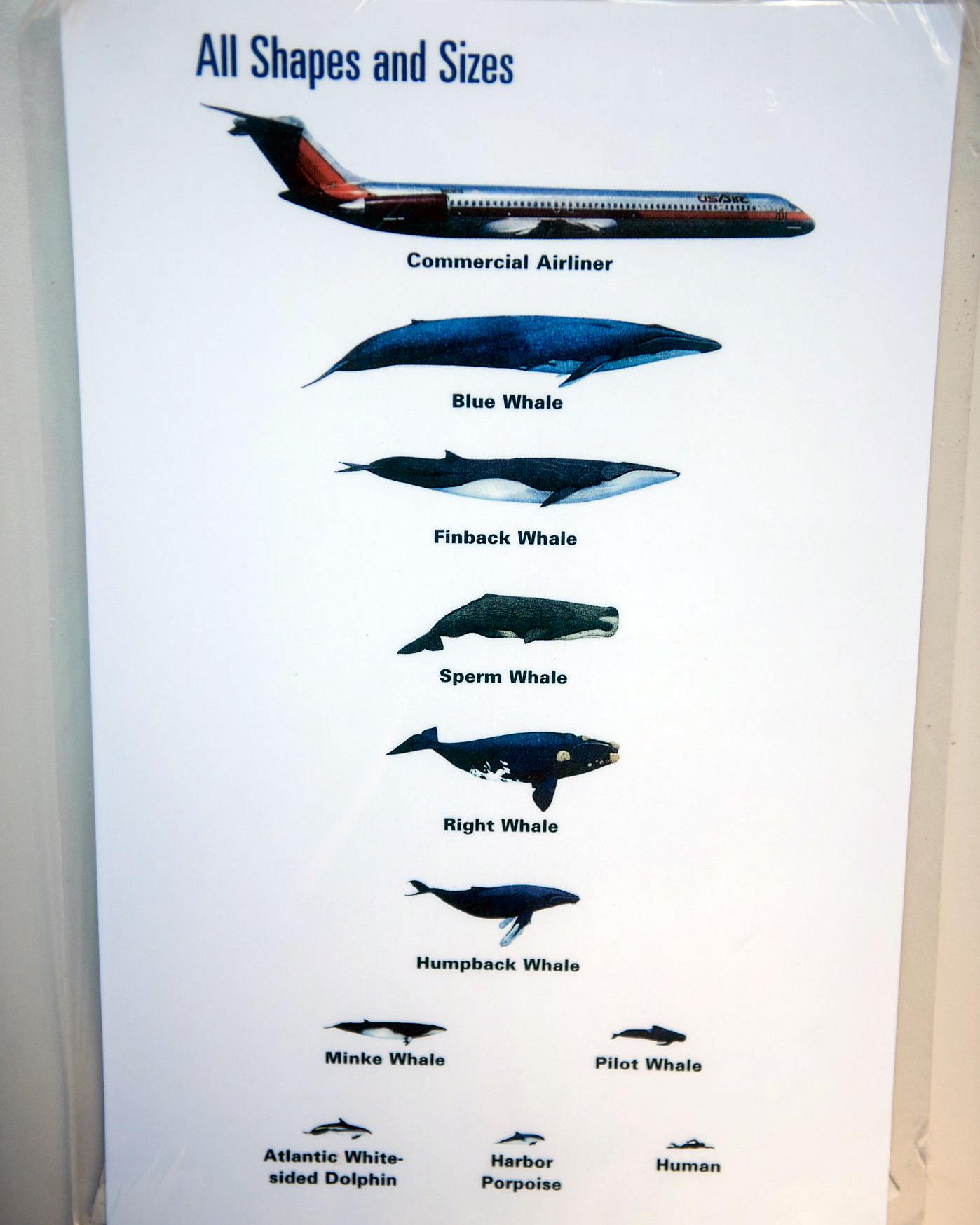 vanessa-lauren-whale-watch-3-s112087-0415.jpg
