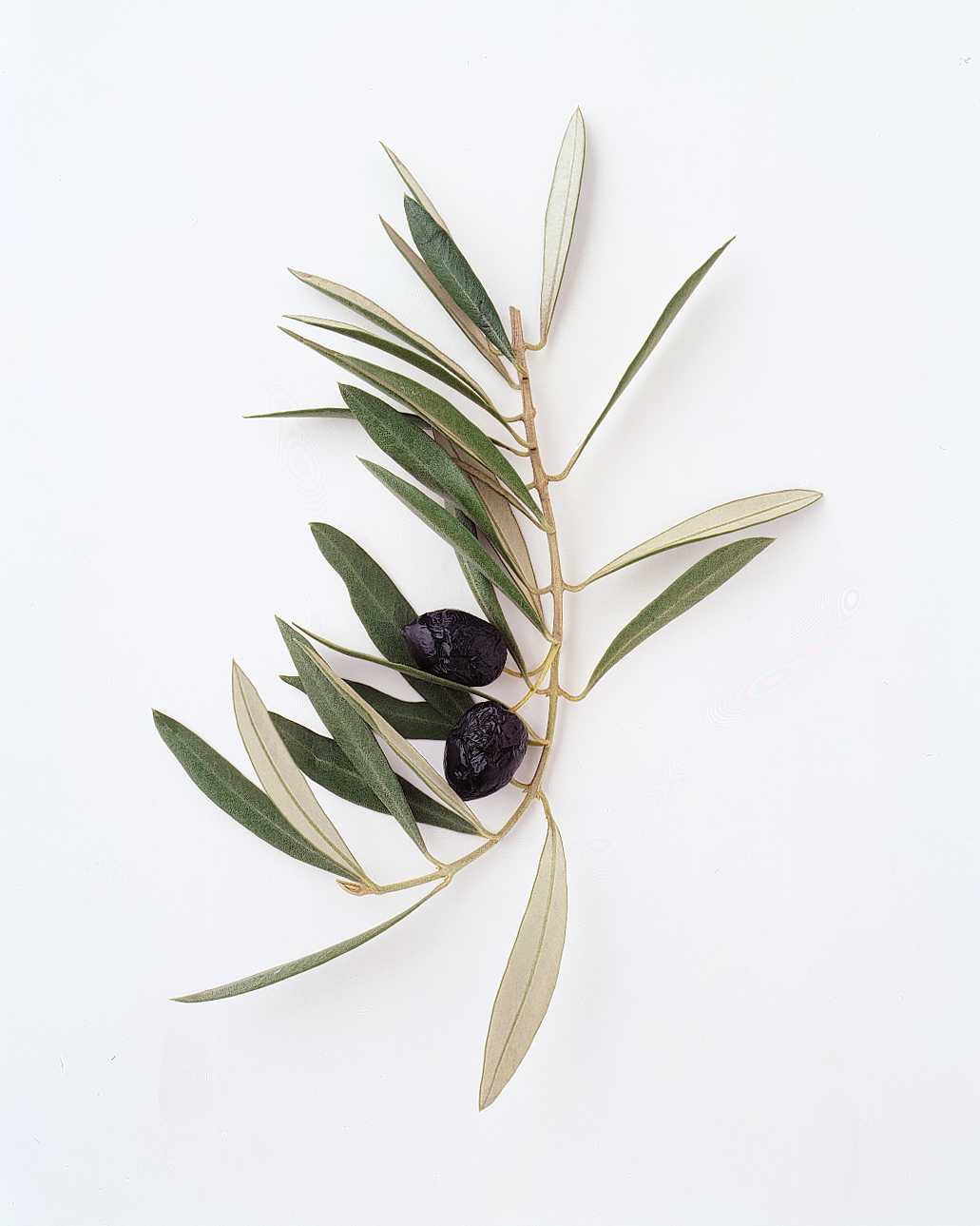 flower-glossary-olive-a98432-0415.jpg