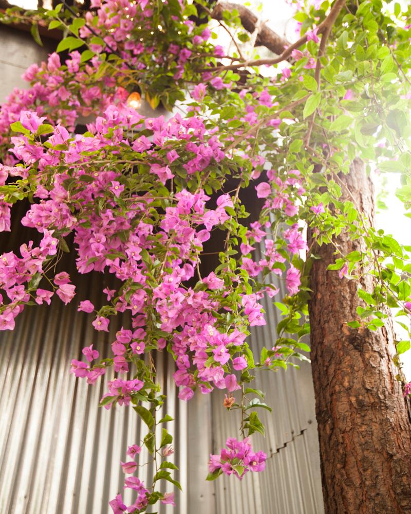 alicia-lund-nikki-bridal-shower-overhead-flowers-0715.jpg