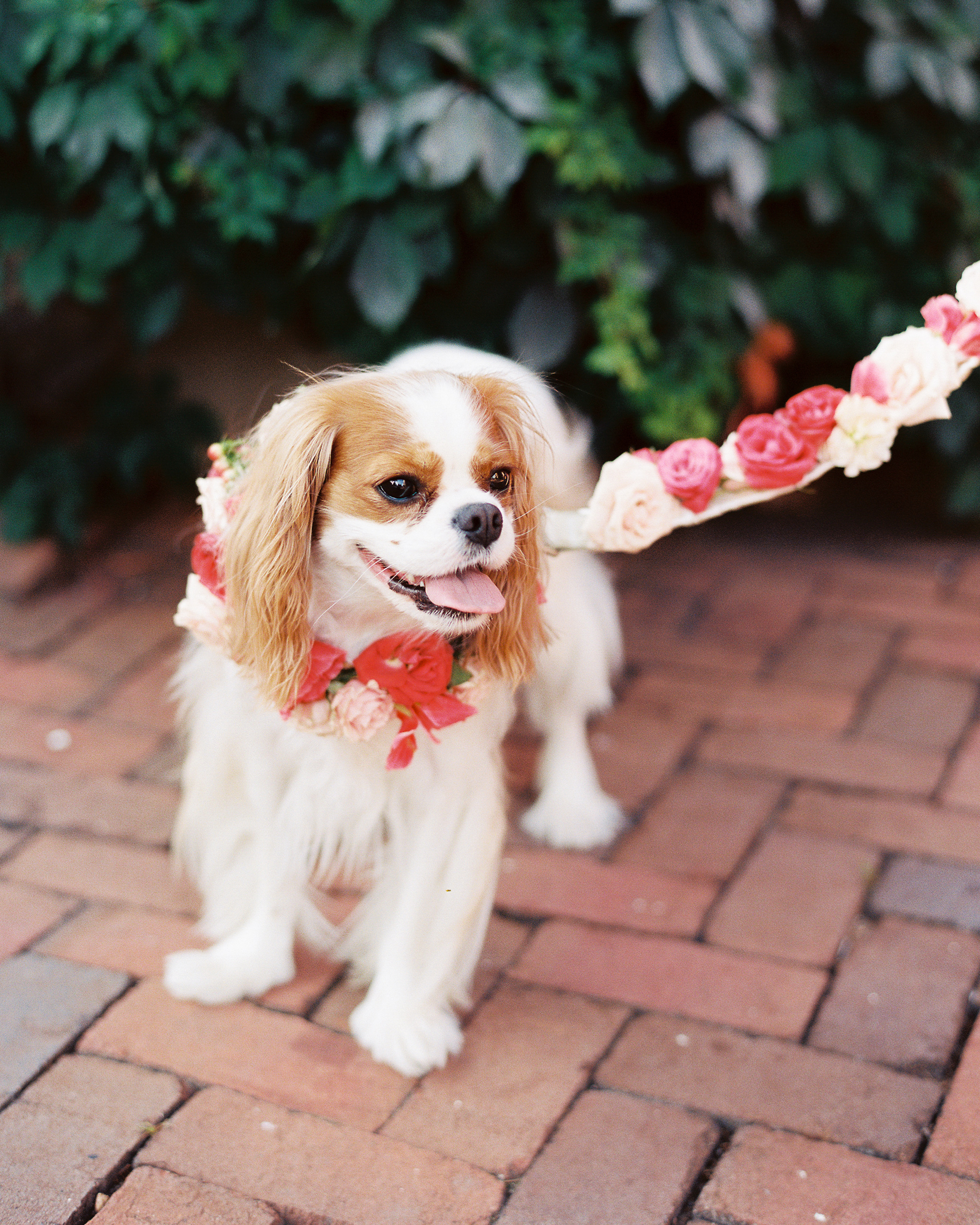 molly-patrick-wedding-dog-3271-s111760-0115.jpg