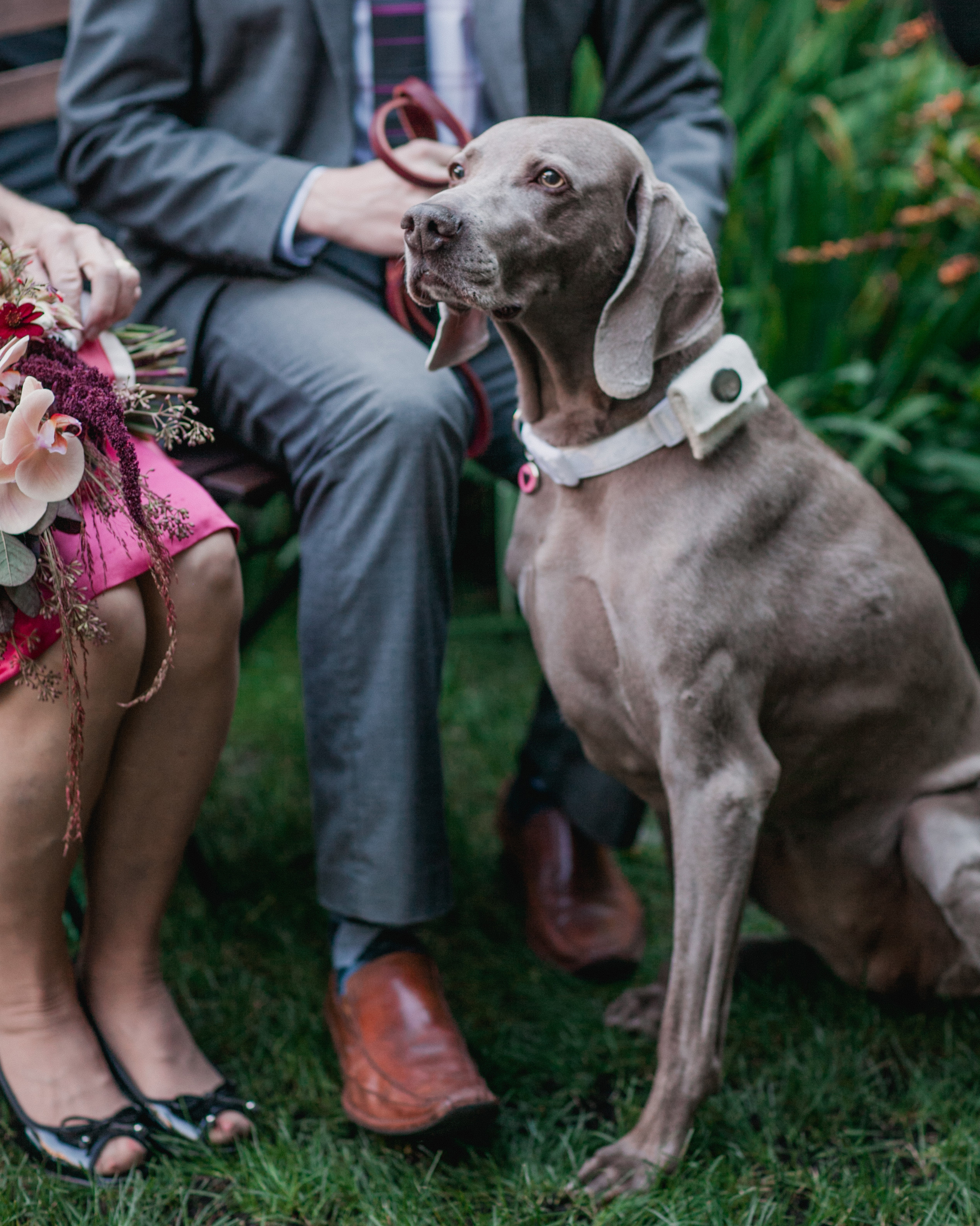 jessica-kirk-wedding-dog-0414.jpg