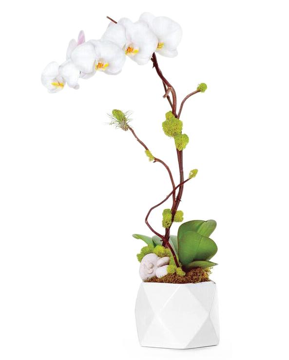 potted-orchid-f7rzftclhsu-kk814qdirmvqzdviry-nu51b5ypccua-s112287.jpg