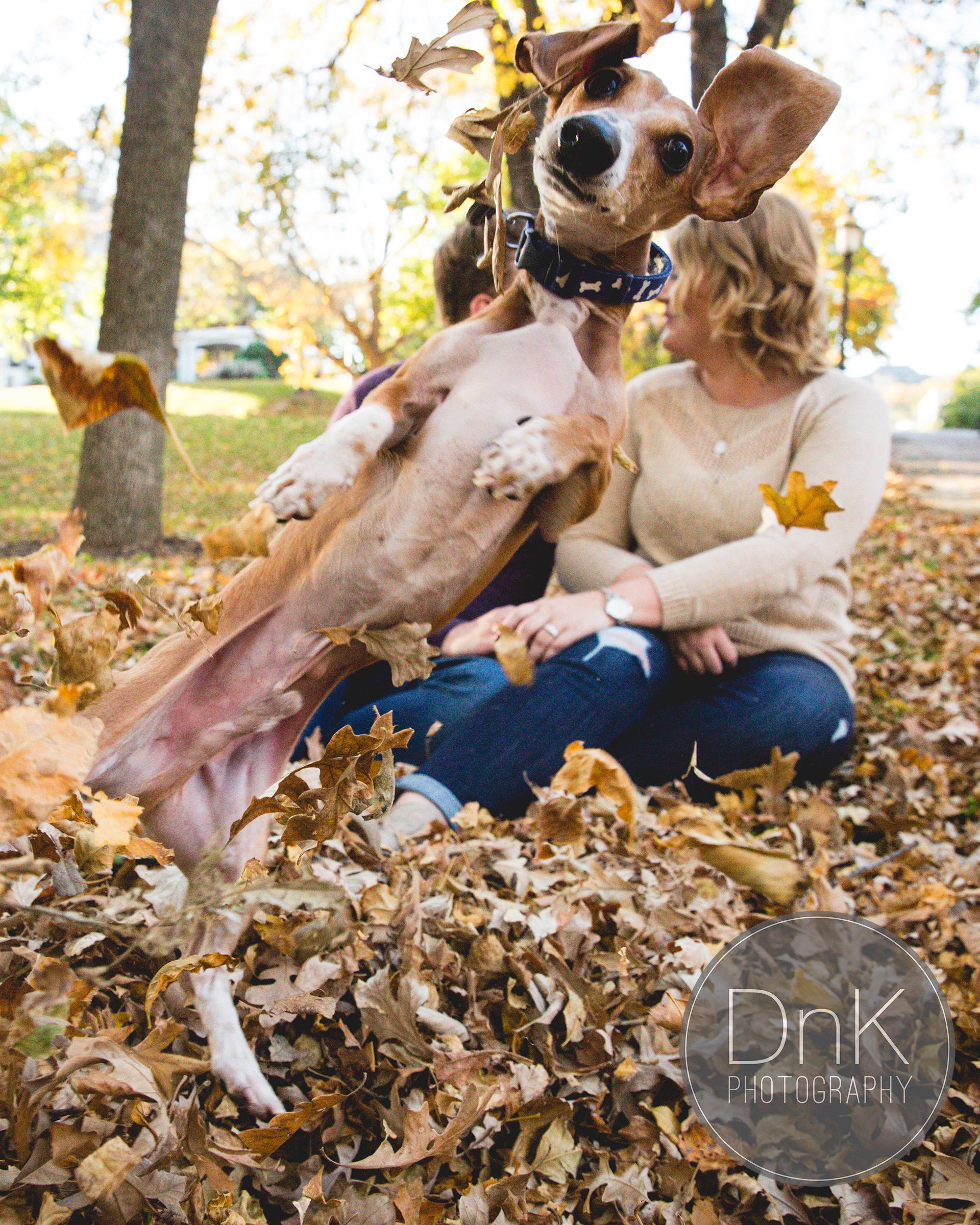 dog-engagement-photobomb-1015.jpg