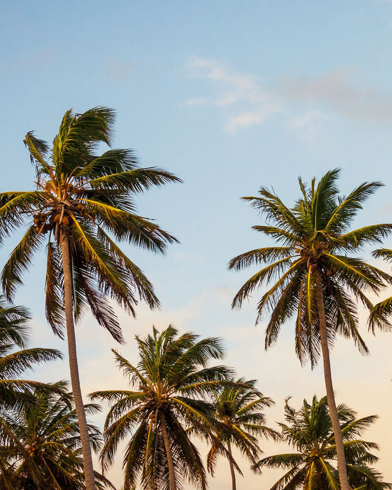 palm-trees-weekend-getaway-0216.jpg