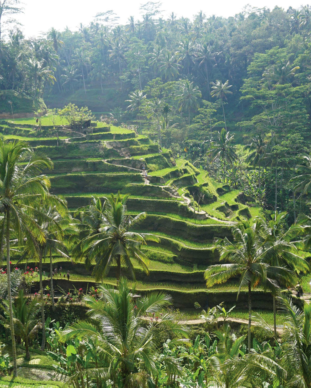 travel-honeymoon-diaries-rice-terraces-in-bali-s112955.jpg