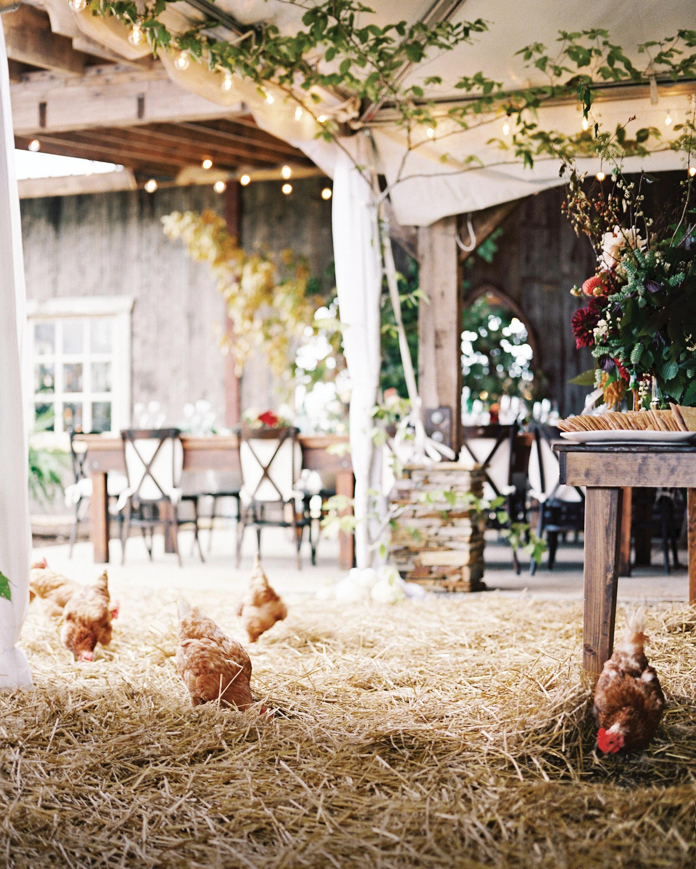 stephanie-mike-wedding-north-carolina-story-opener-reception-tent-farm-chickens-58-s112048.jpg