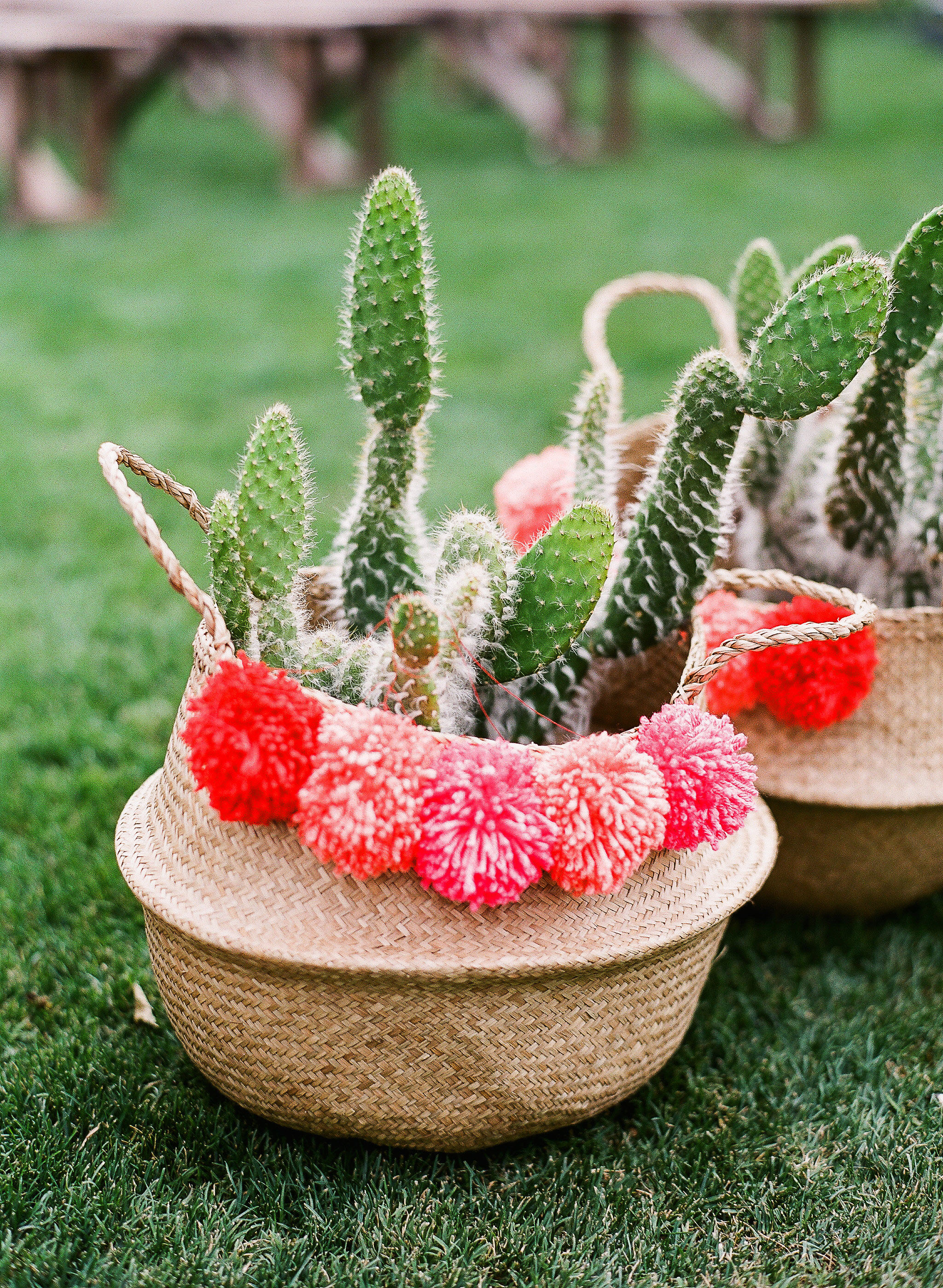 aubrey austin wedding cacti