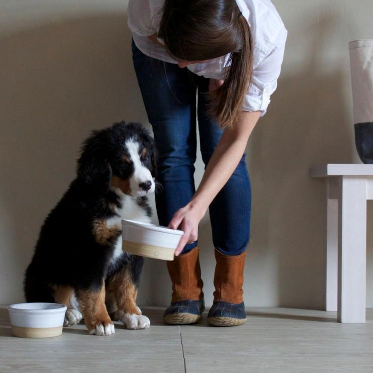 6 Genius Wedding Registry Ideas for Pet Owners